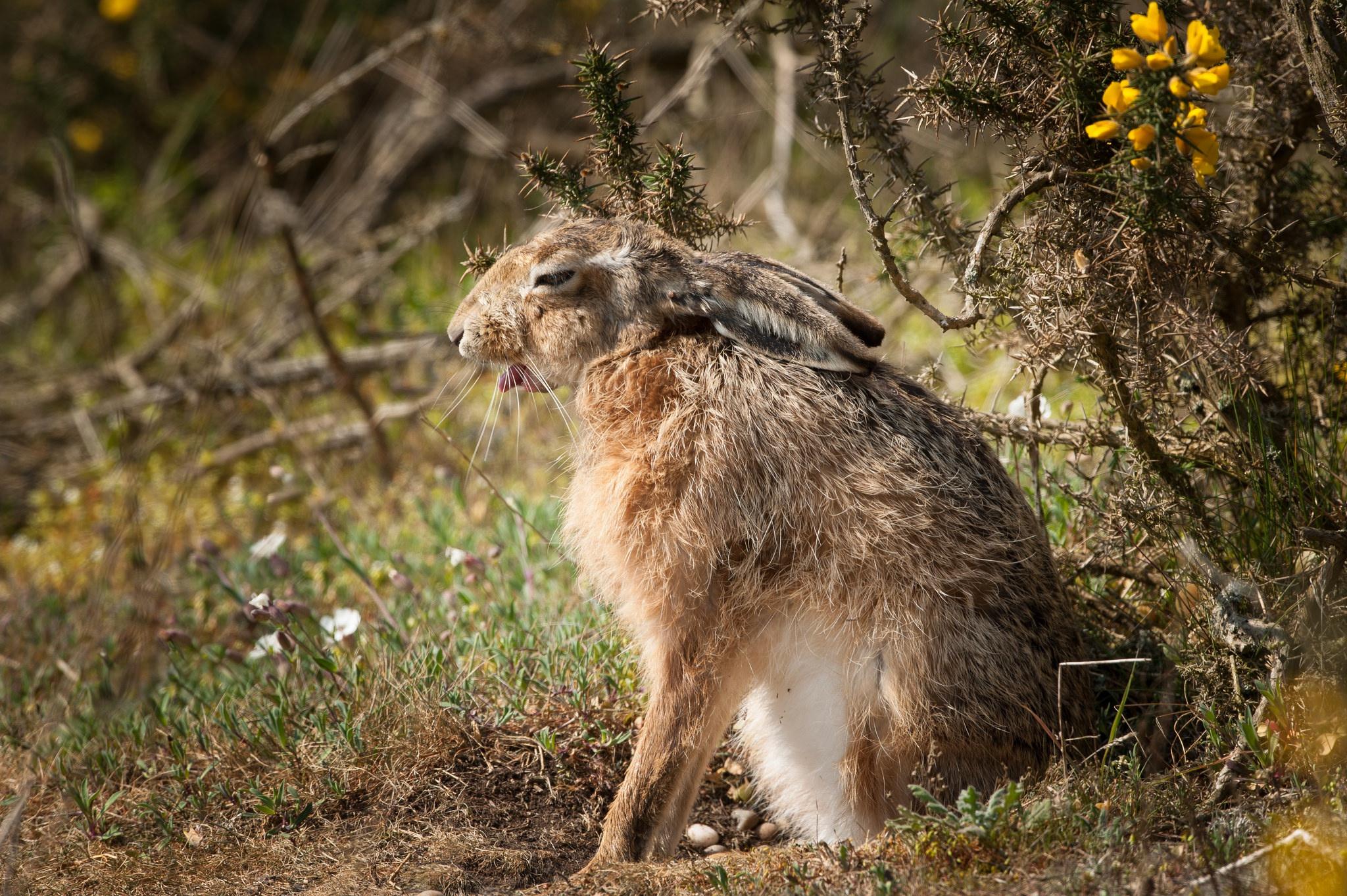 природа животные заяц nature animals hare  № 103316 загрузить