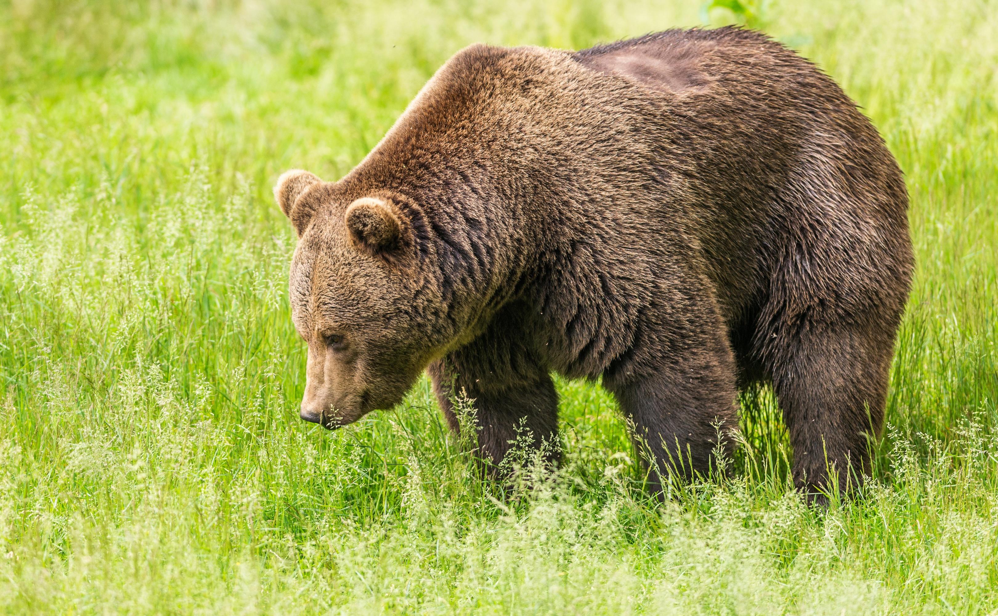 Открытка, картинки медведь картинки медведь