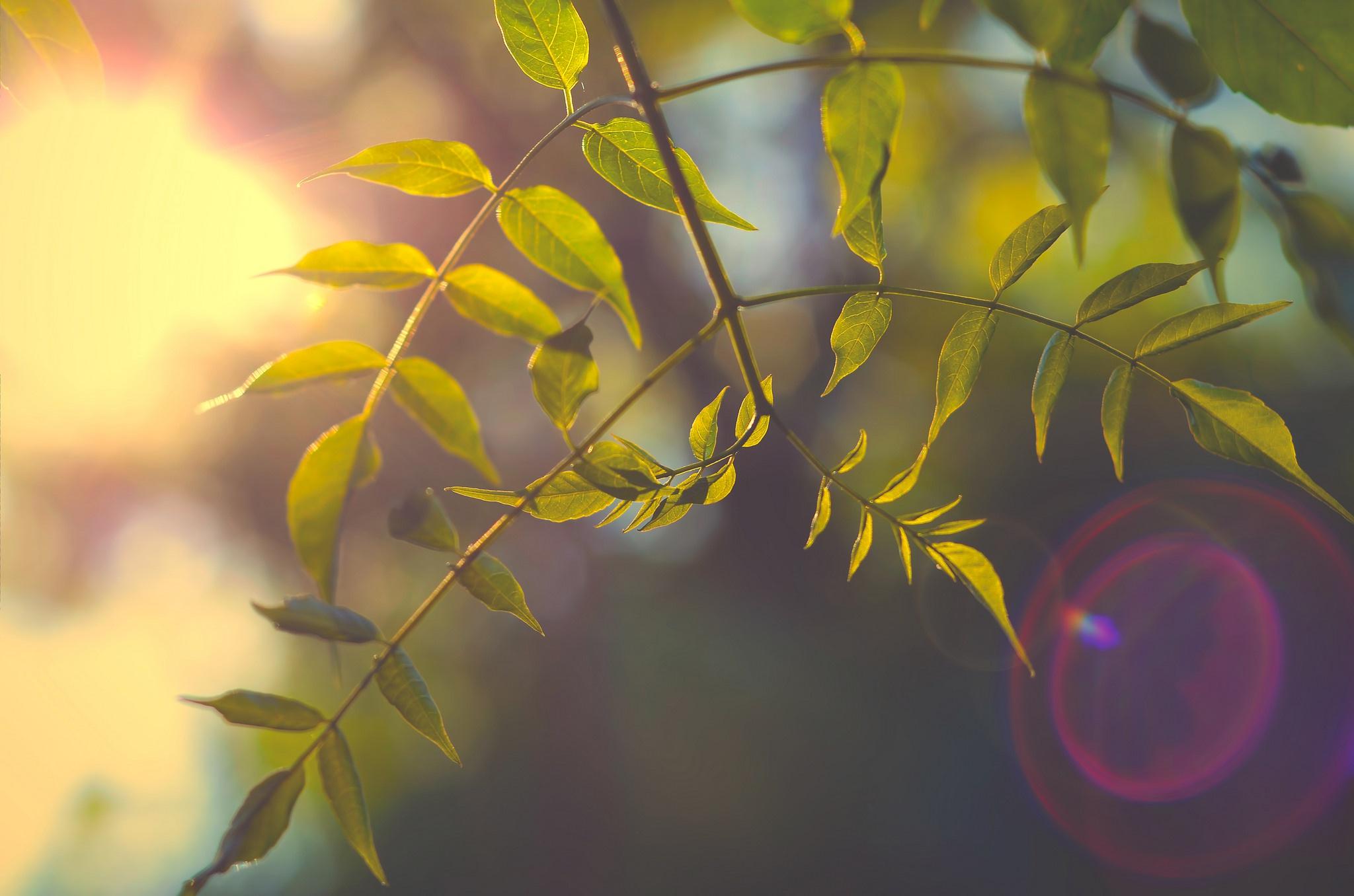 природа ветка листья nature branch leaves  № 2298  скачать
