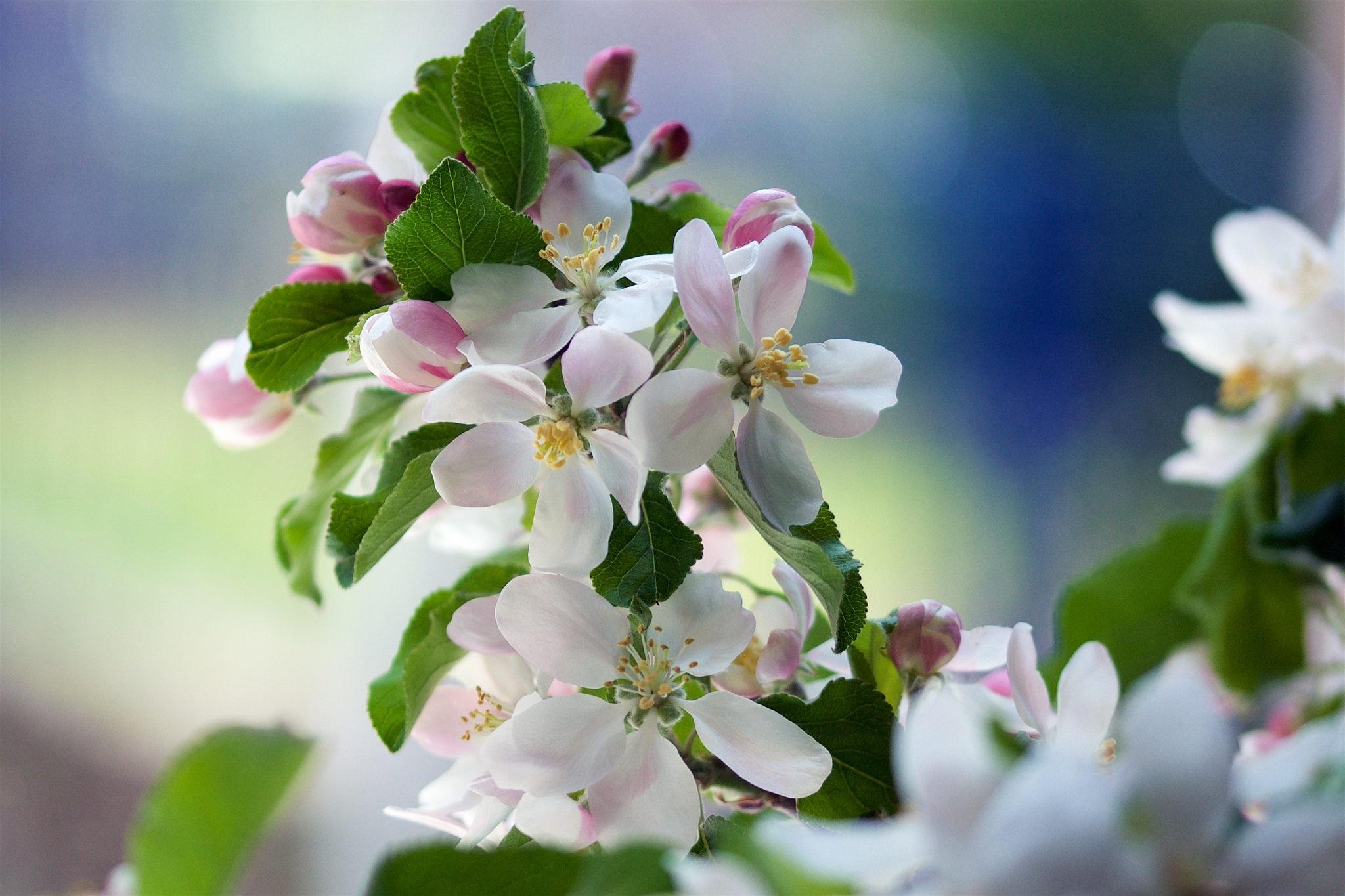 Открытки с яблоневым садом, рождения