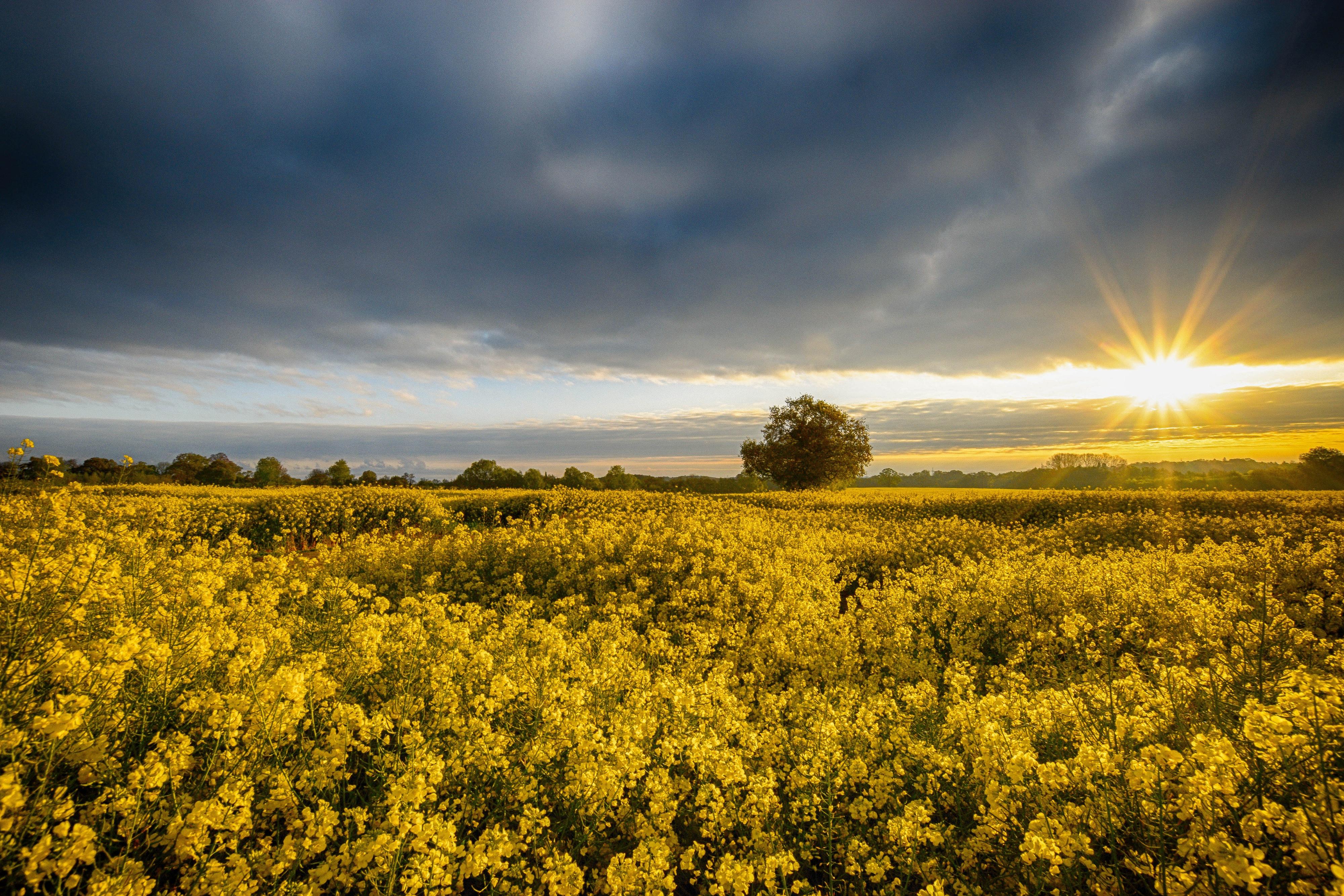 поле цветы рассвет field flowers dawn скачать