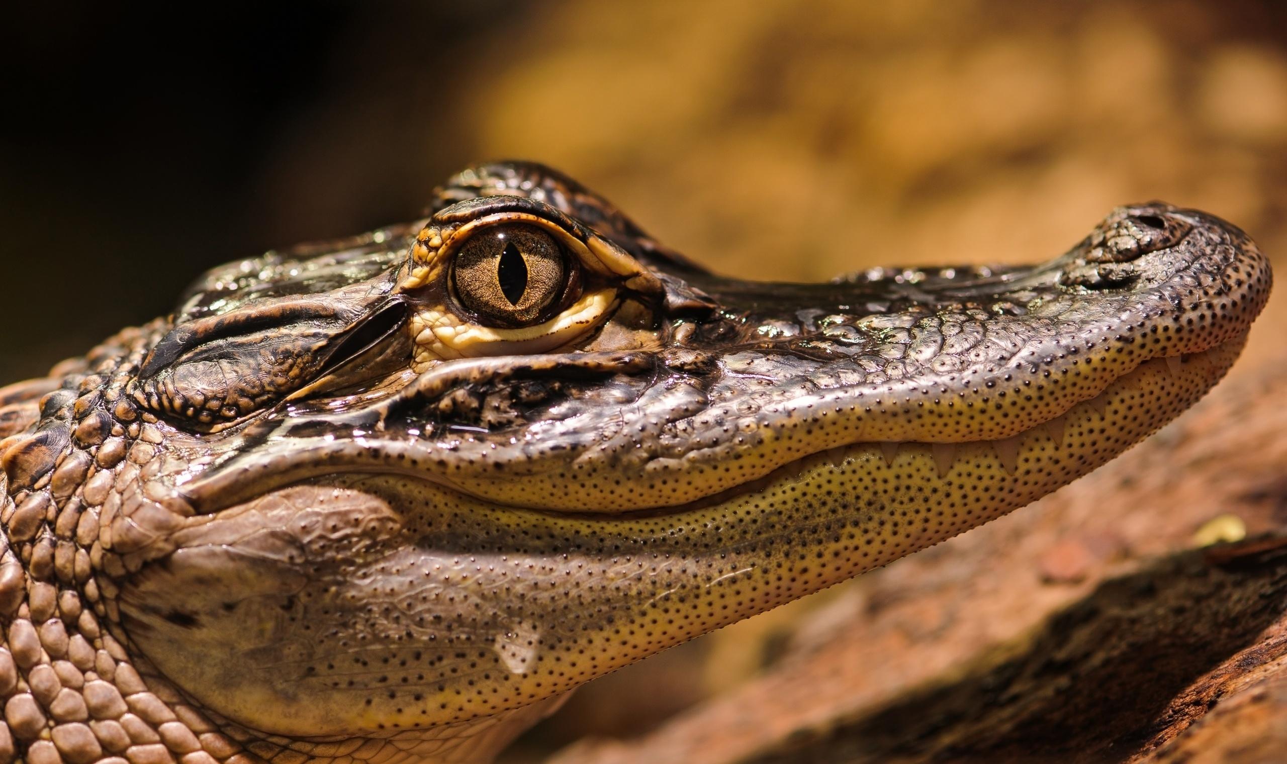 Месяцами малышу, крокодил картинки