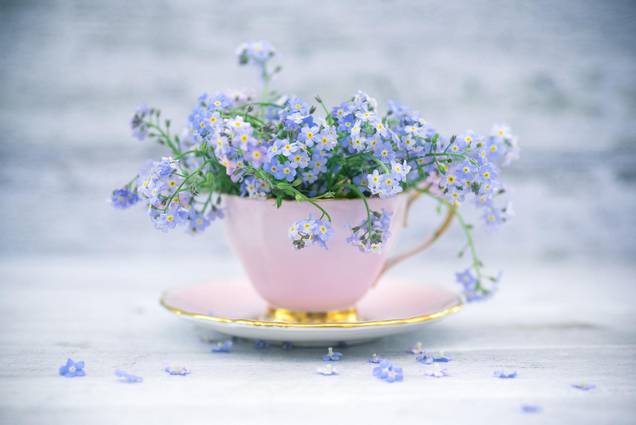 природа цветы чашка  № 1486800 без смс