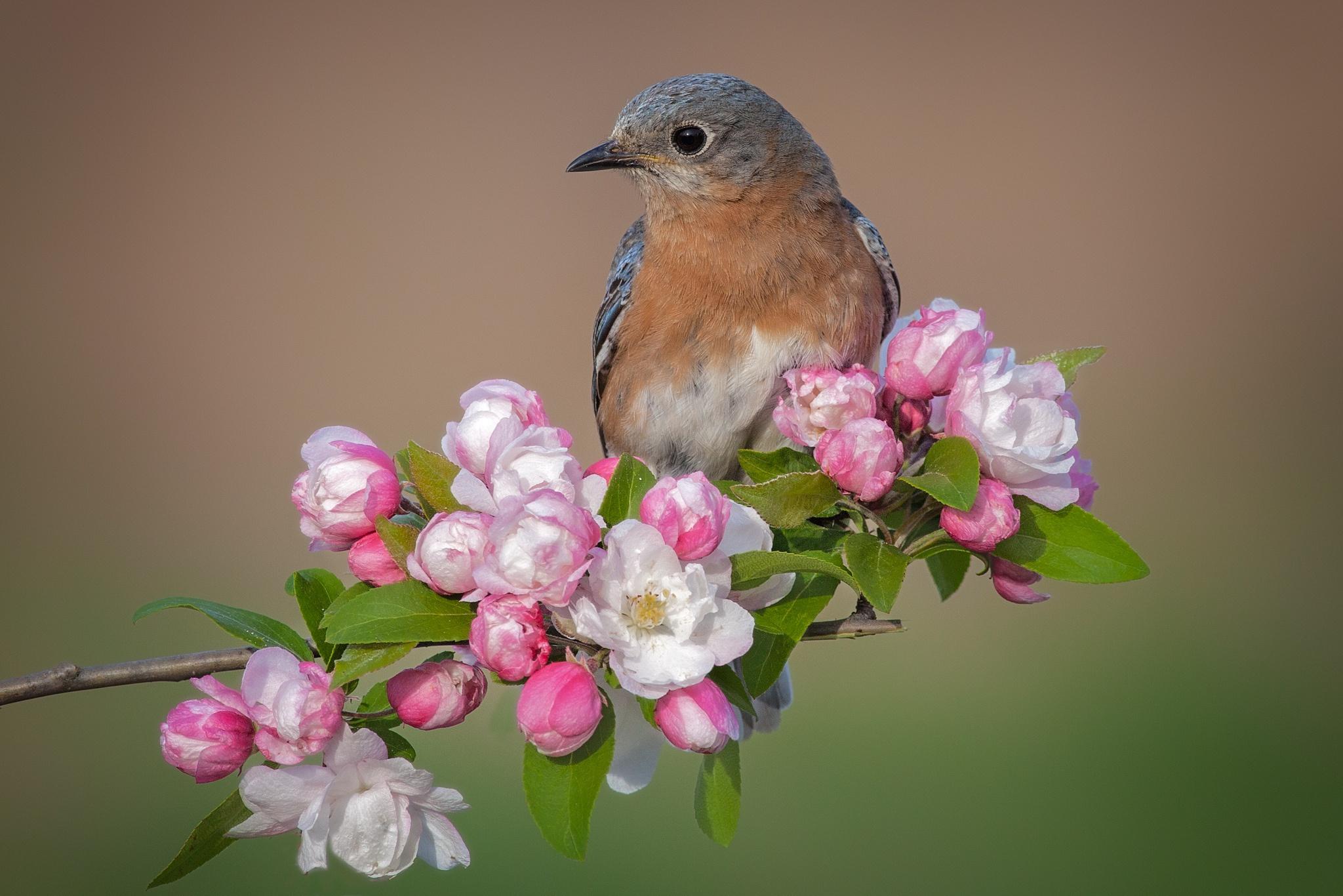 Картинки с цветами и птицами, картинки преподаватели
