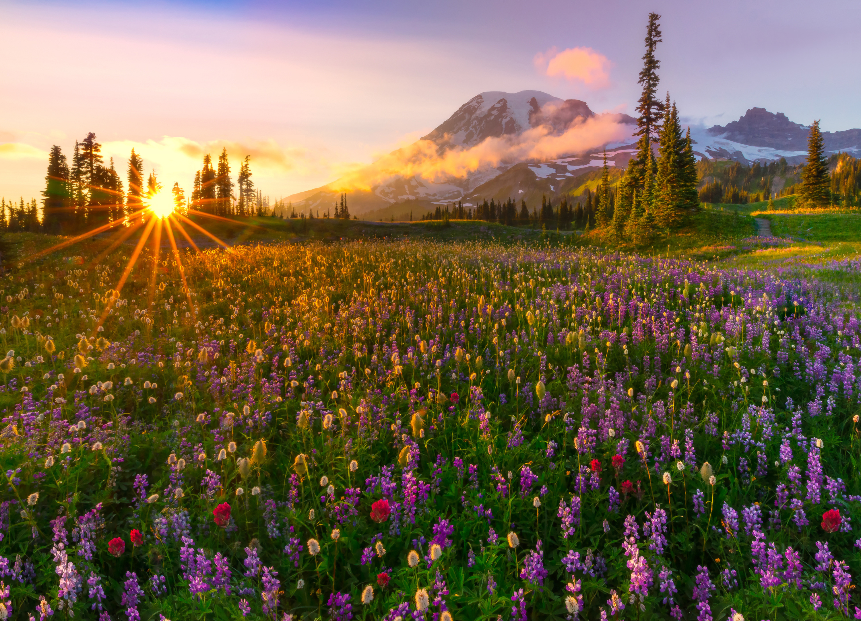 цветочная поляна ели горы загрузить