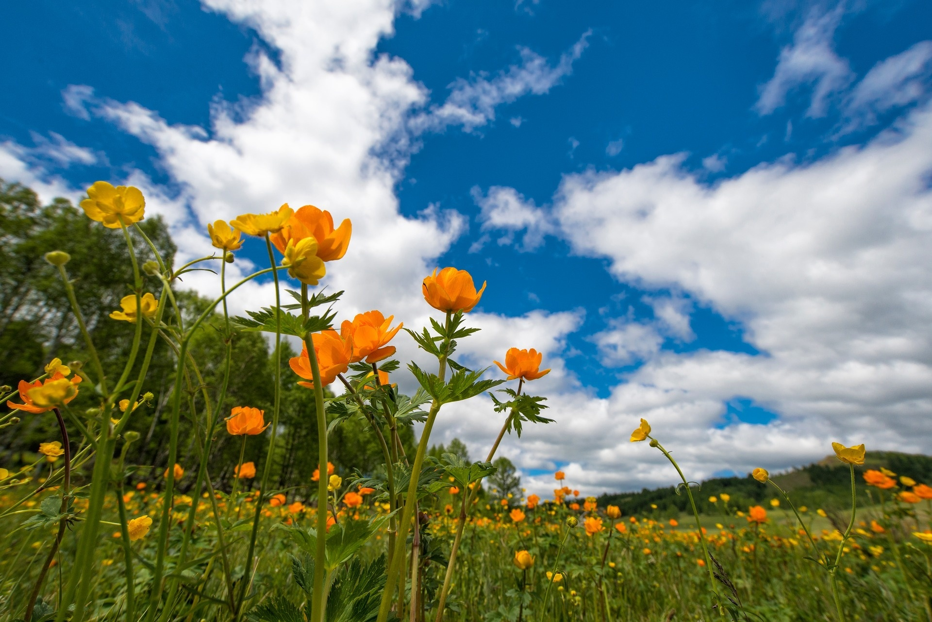 картинки с июльскими цветами вам