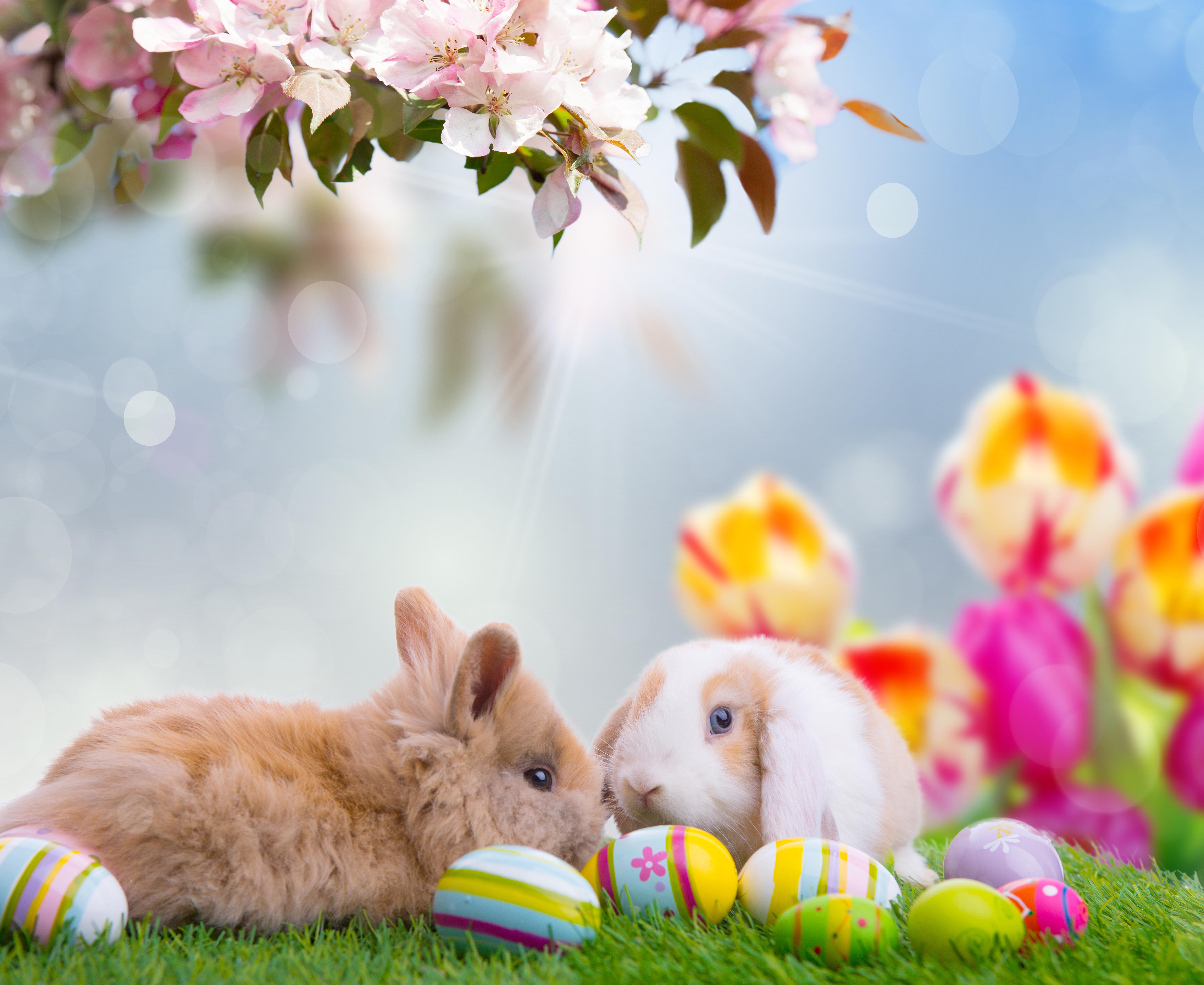 кролик с тюльпанами  № 1144603 бесплатно