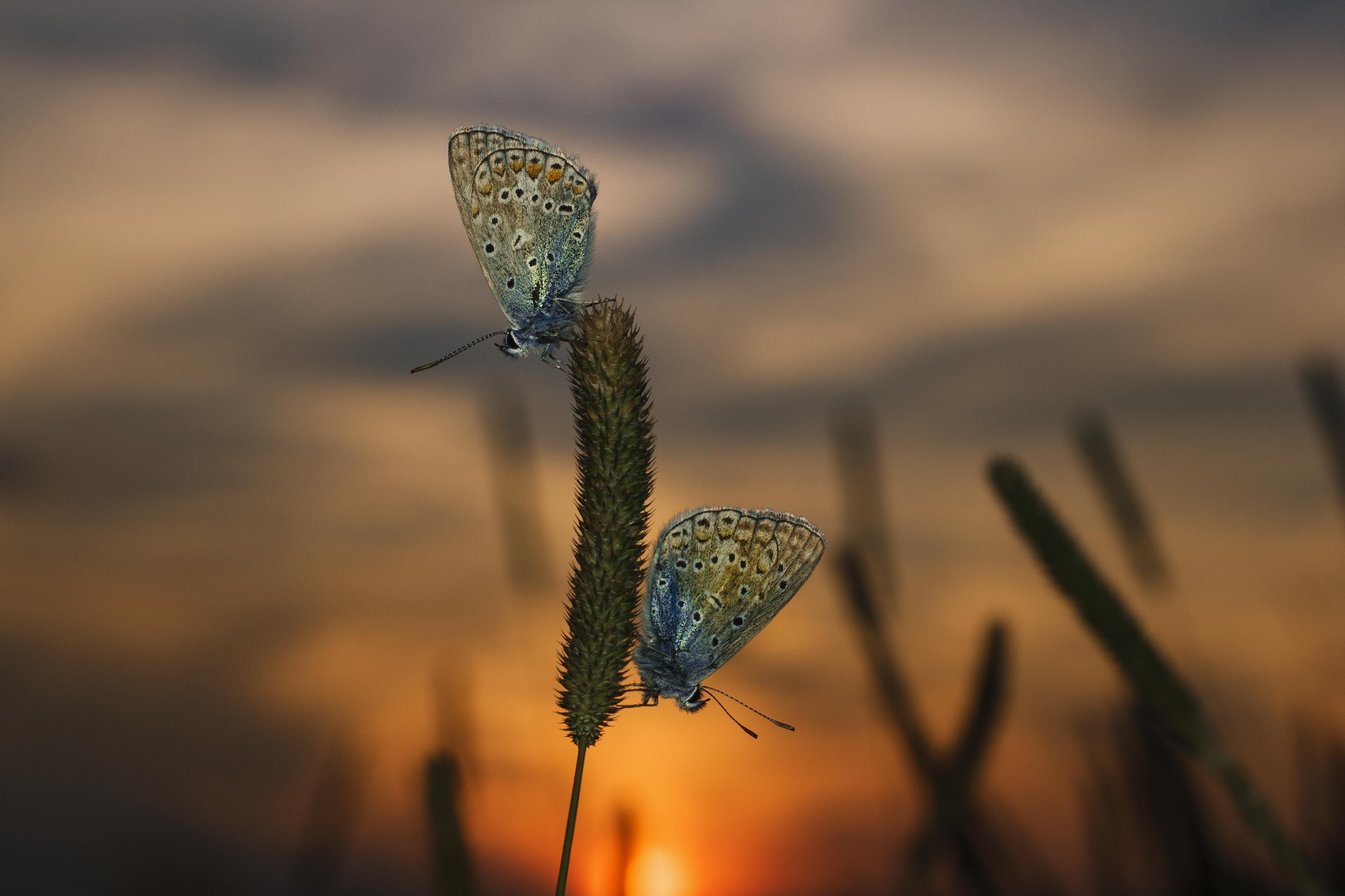 Бабочка закат трава загрузить