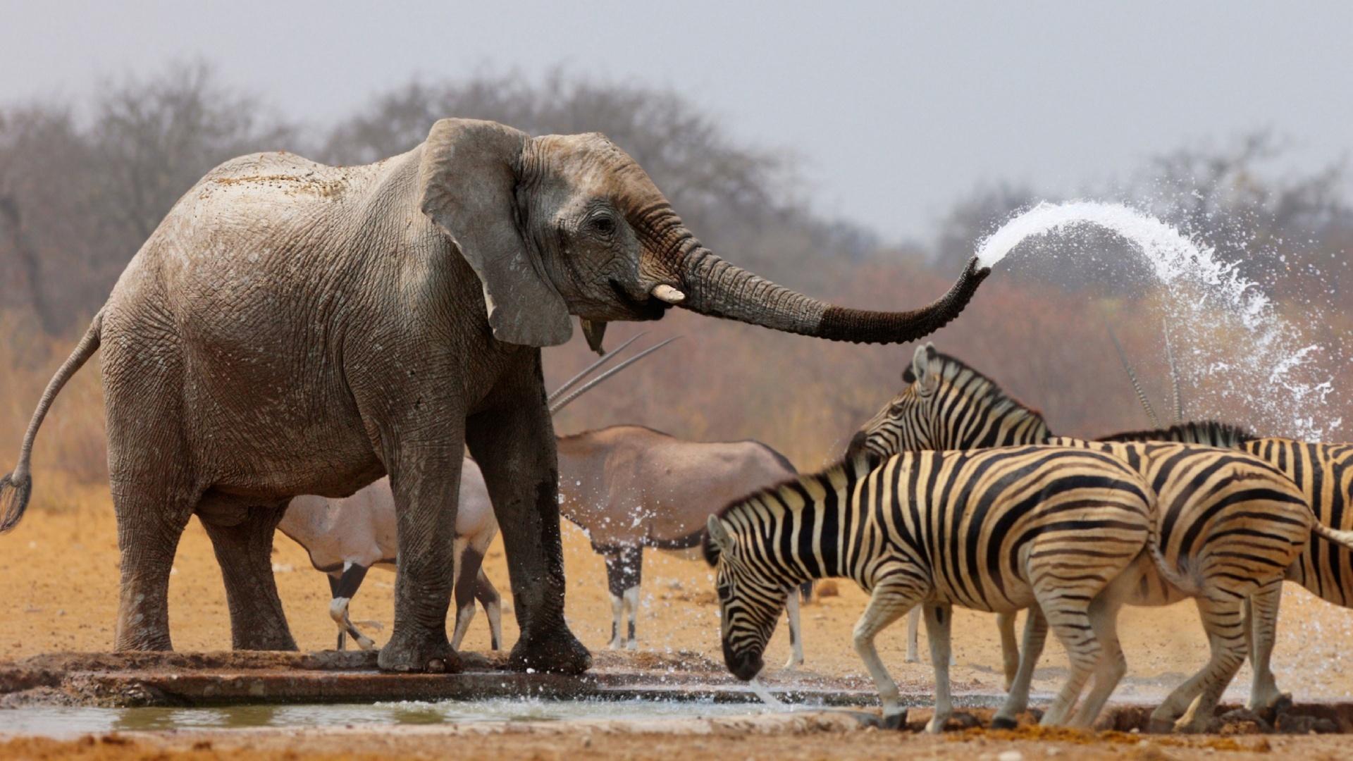 friendship and zebra