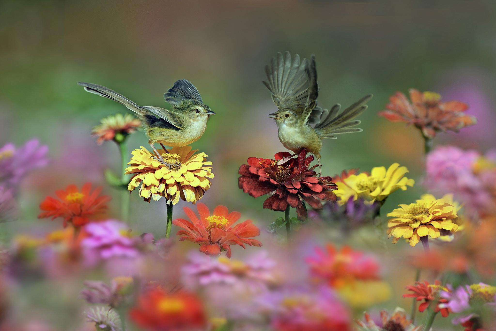 худенькая птичка на лужайке бесплатно