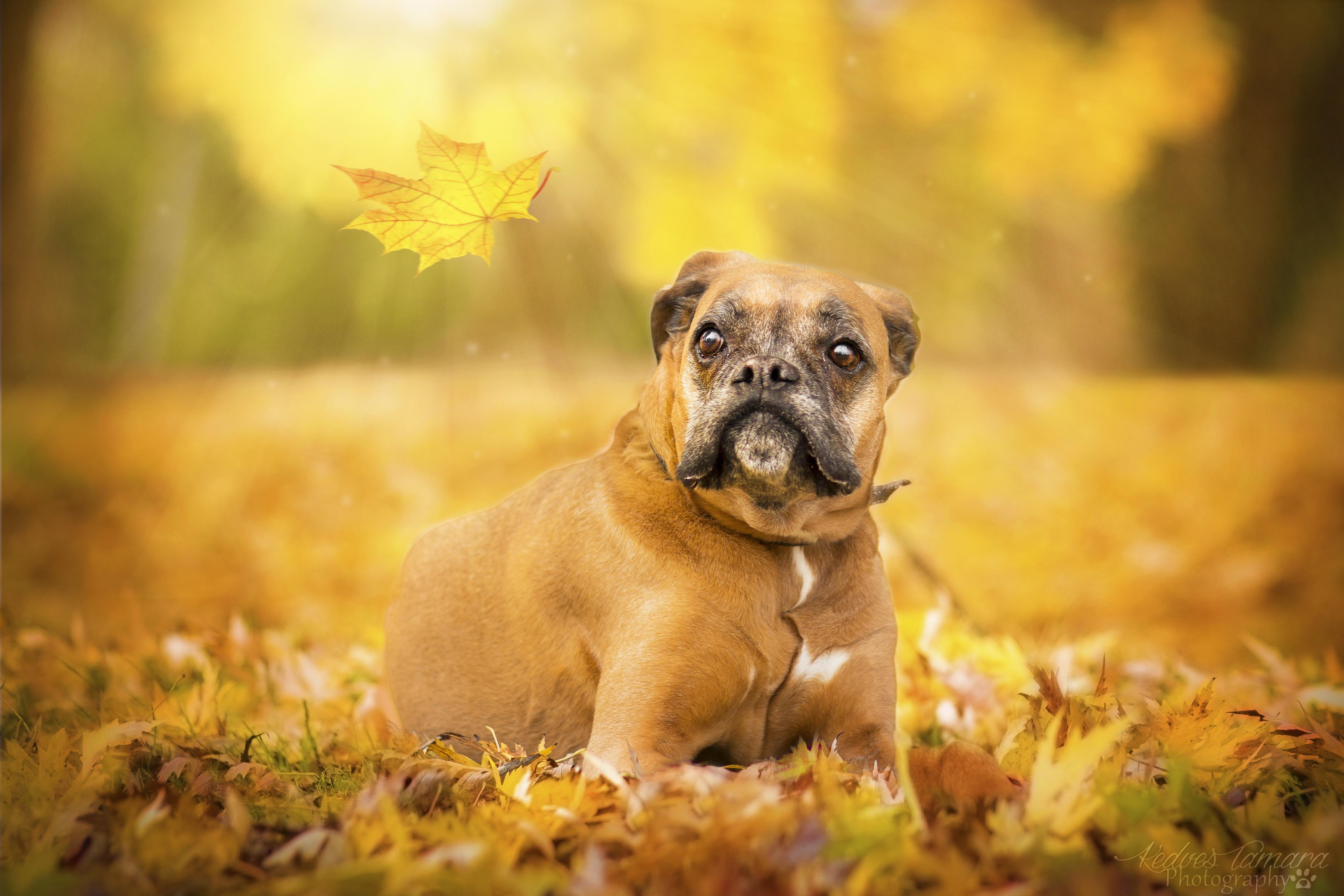 природа животные собака осень листья  № 2019455 загрузить