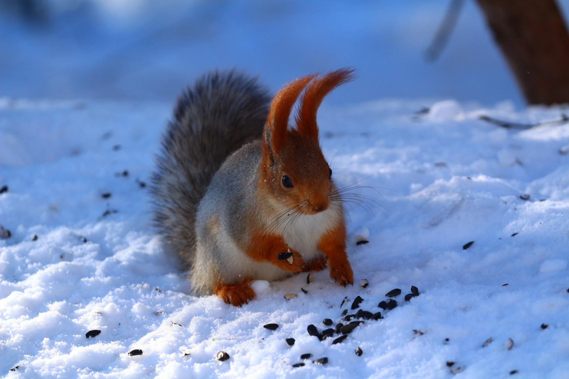 чемпионка картинки животных в зимнее время года новый