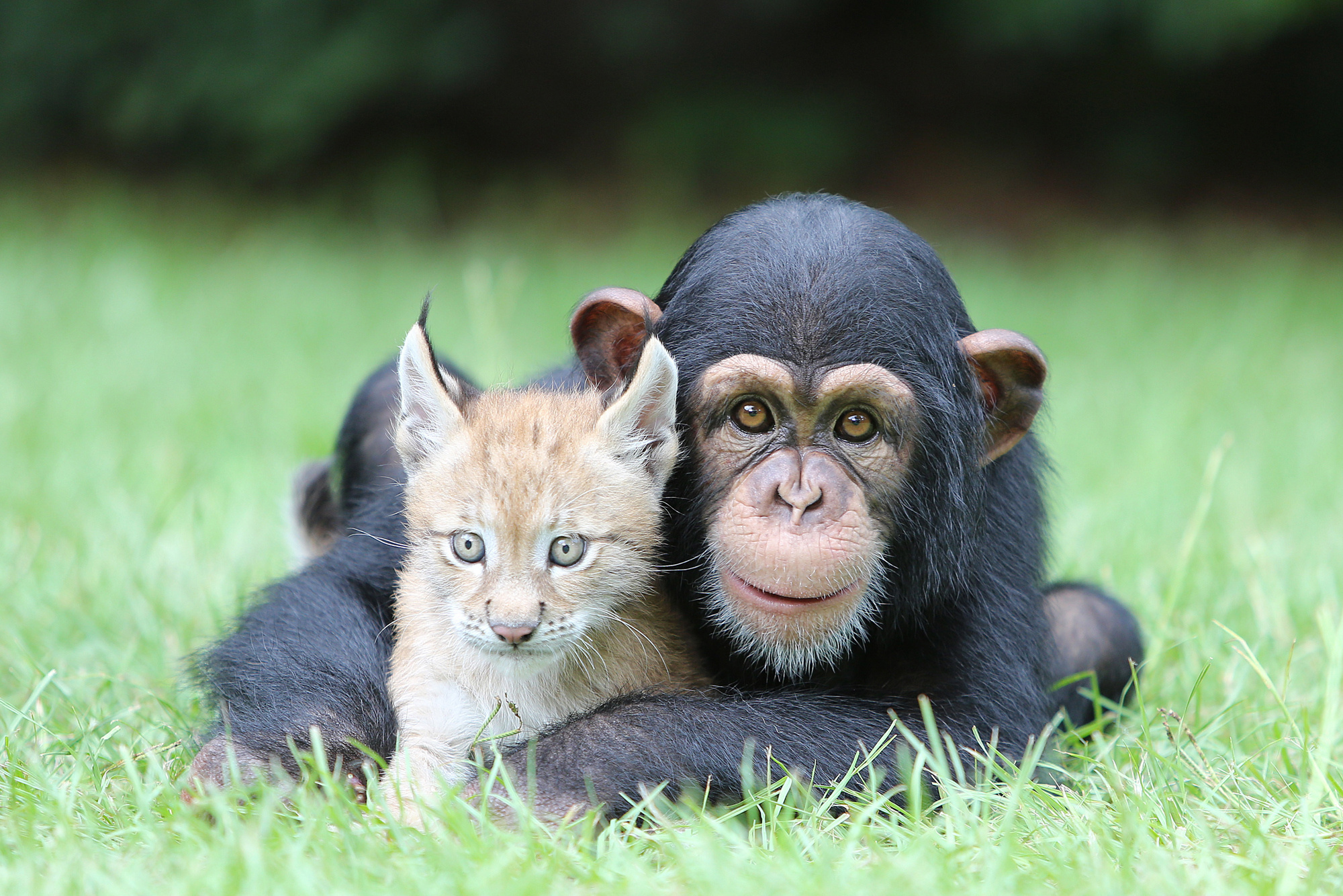 Разные смешные картинки животные, юбилею