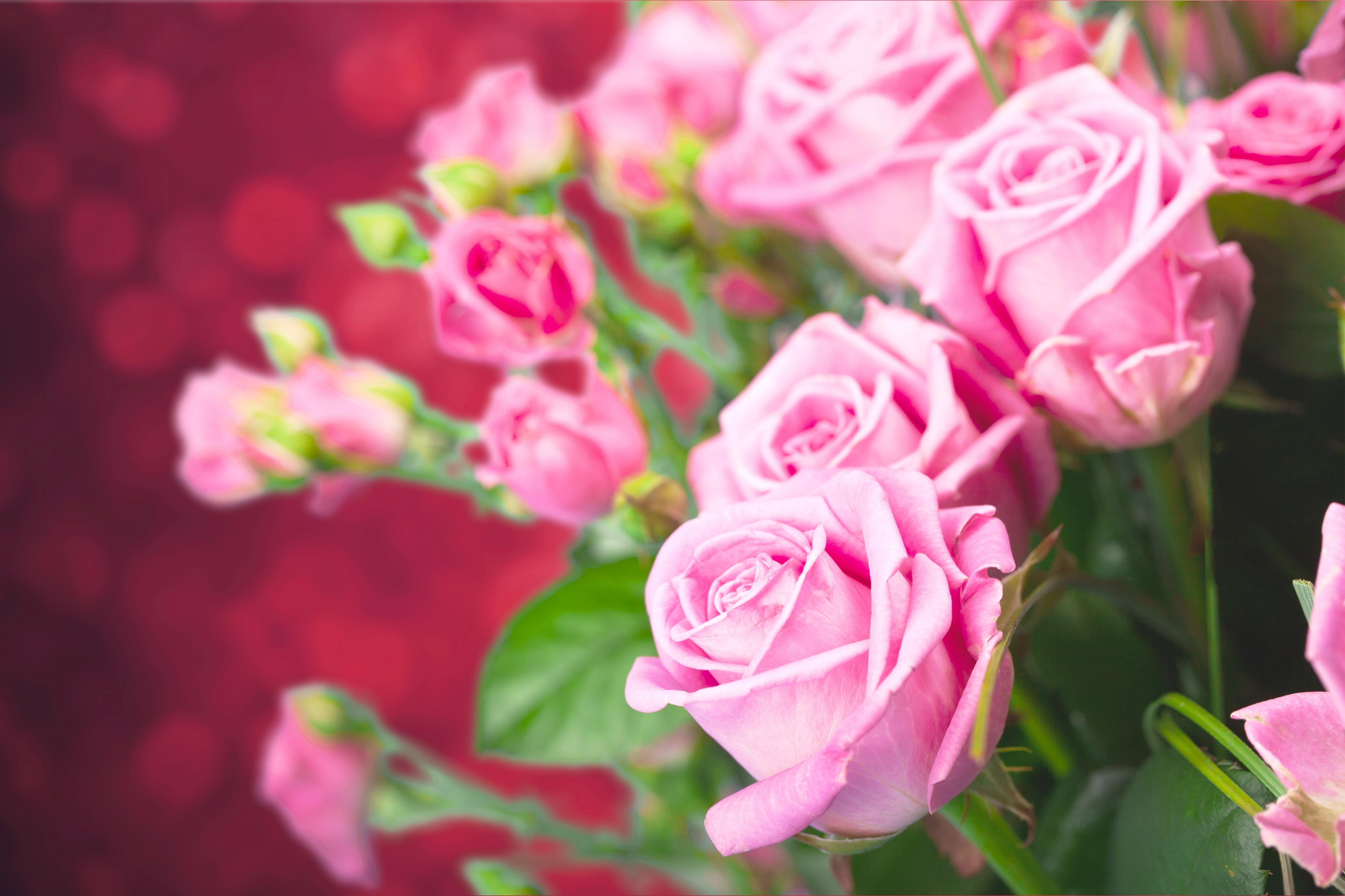 букет роз обои на рабочий стол в высоком качестве № 178077 загрузить