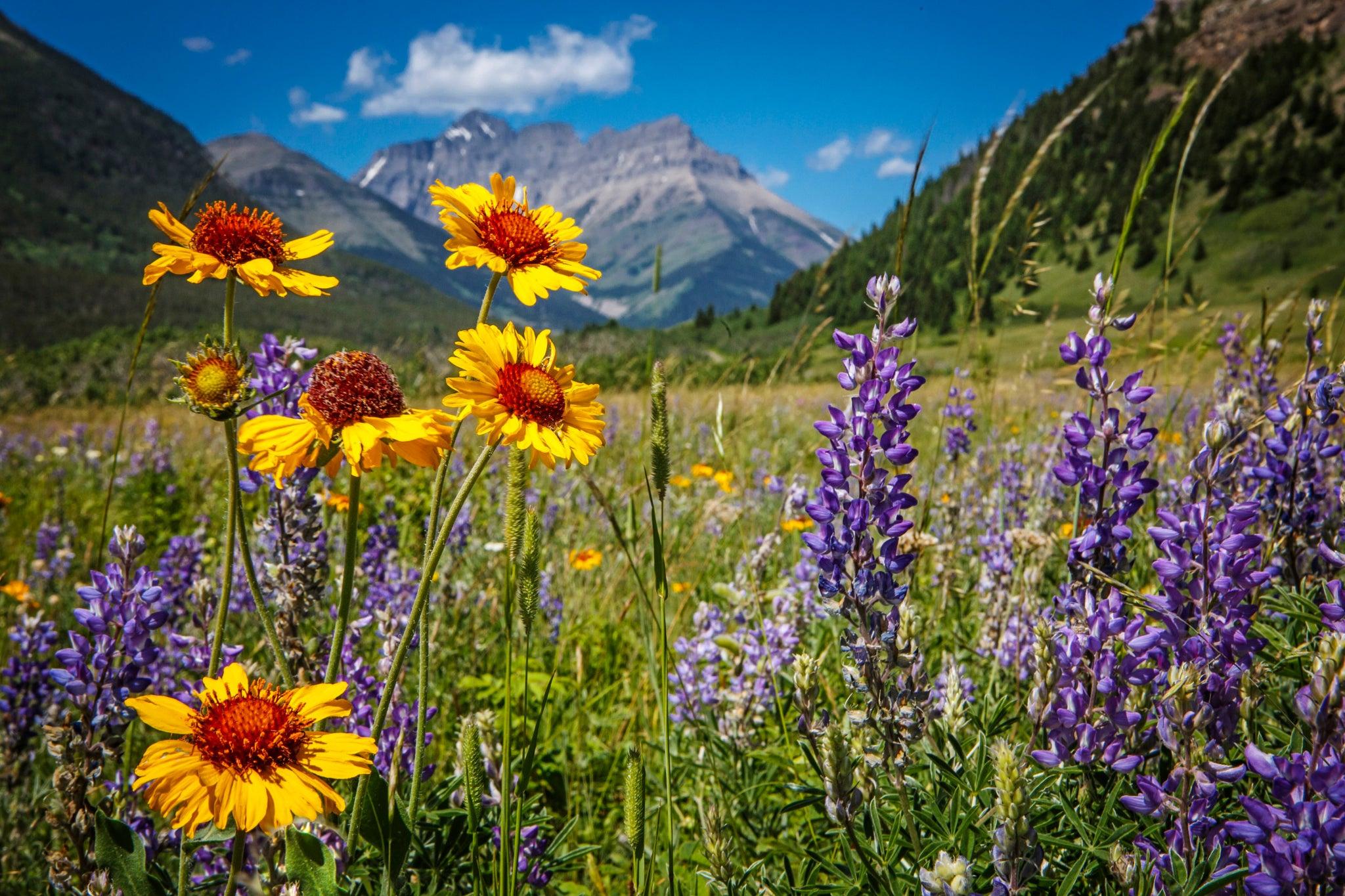 Картинки лето цветы горы
