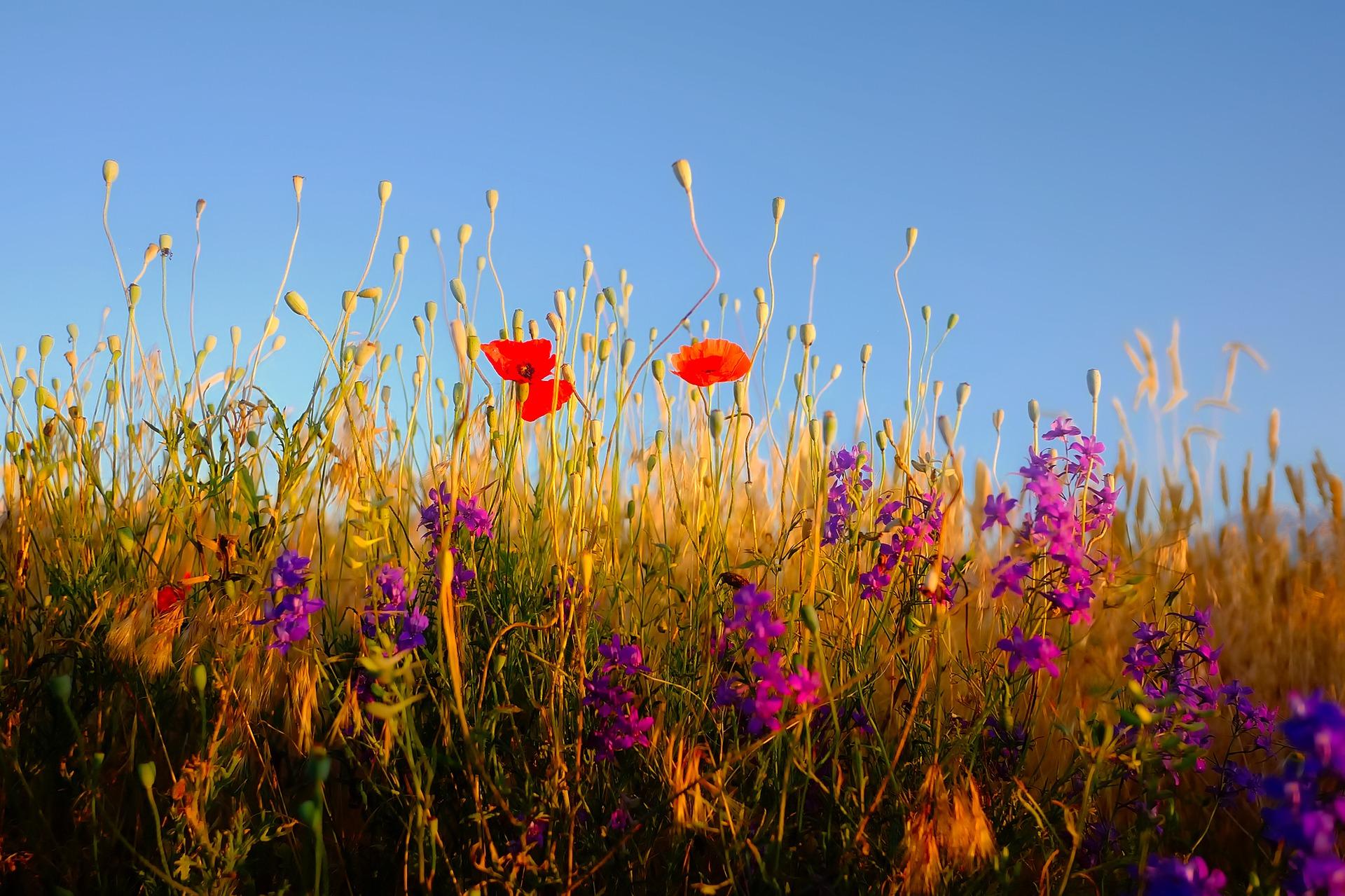 каменные полевые травы букет картинки шла коротком