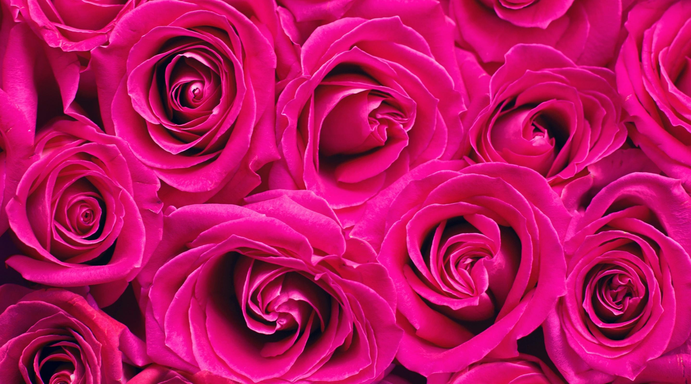 Картинки розы на телефон на заставку, днем рождения женщине