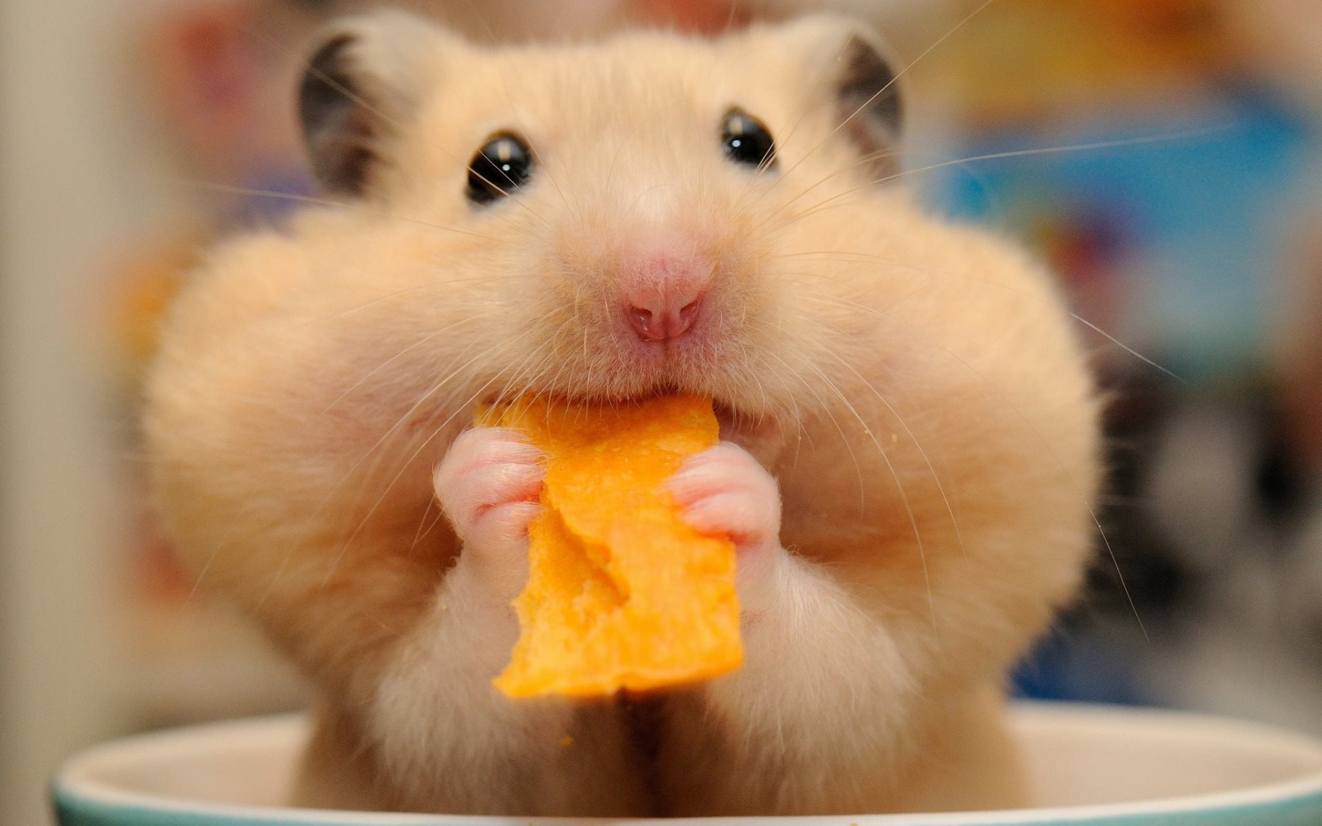 Hamster xxx дренеnaked варкрафт hentia picture