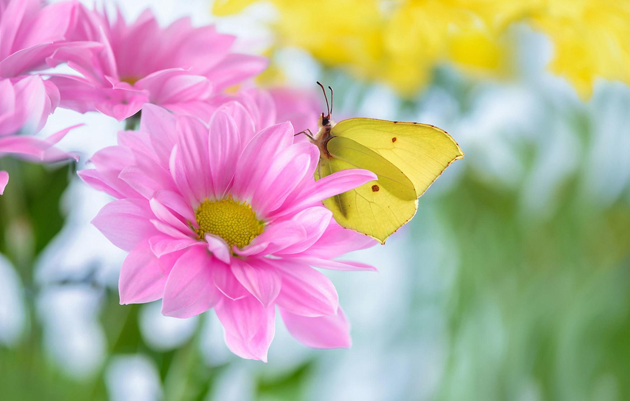 Лето картинки цветы бабочки, своими руками февраля