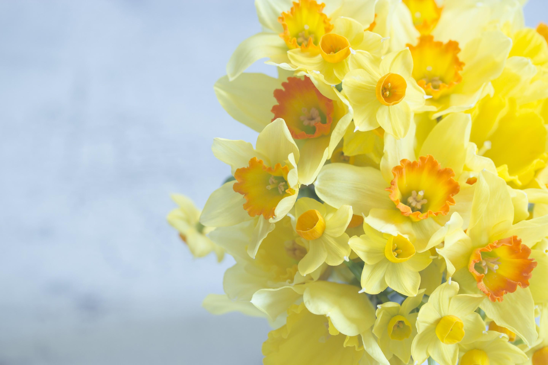 8 Марта, праздник, цветы, желтые без смс