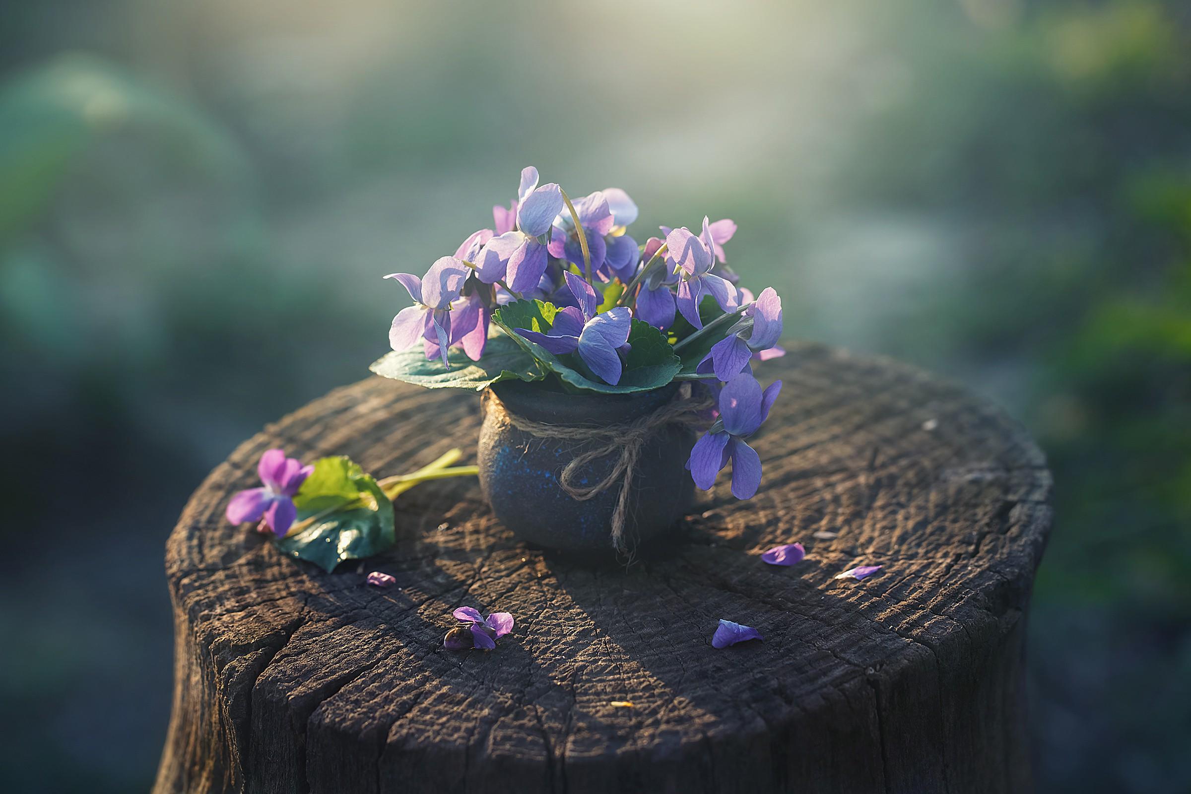 Цветок в горшке бесплатно