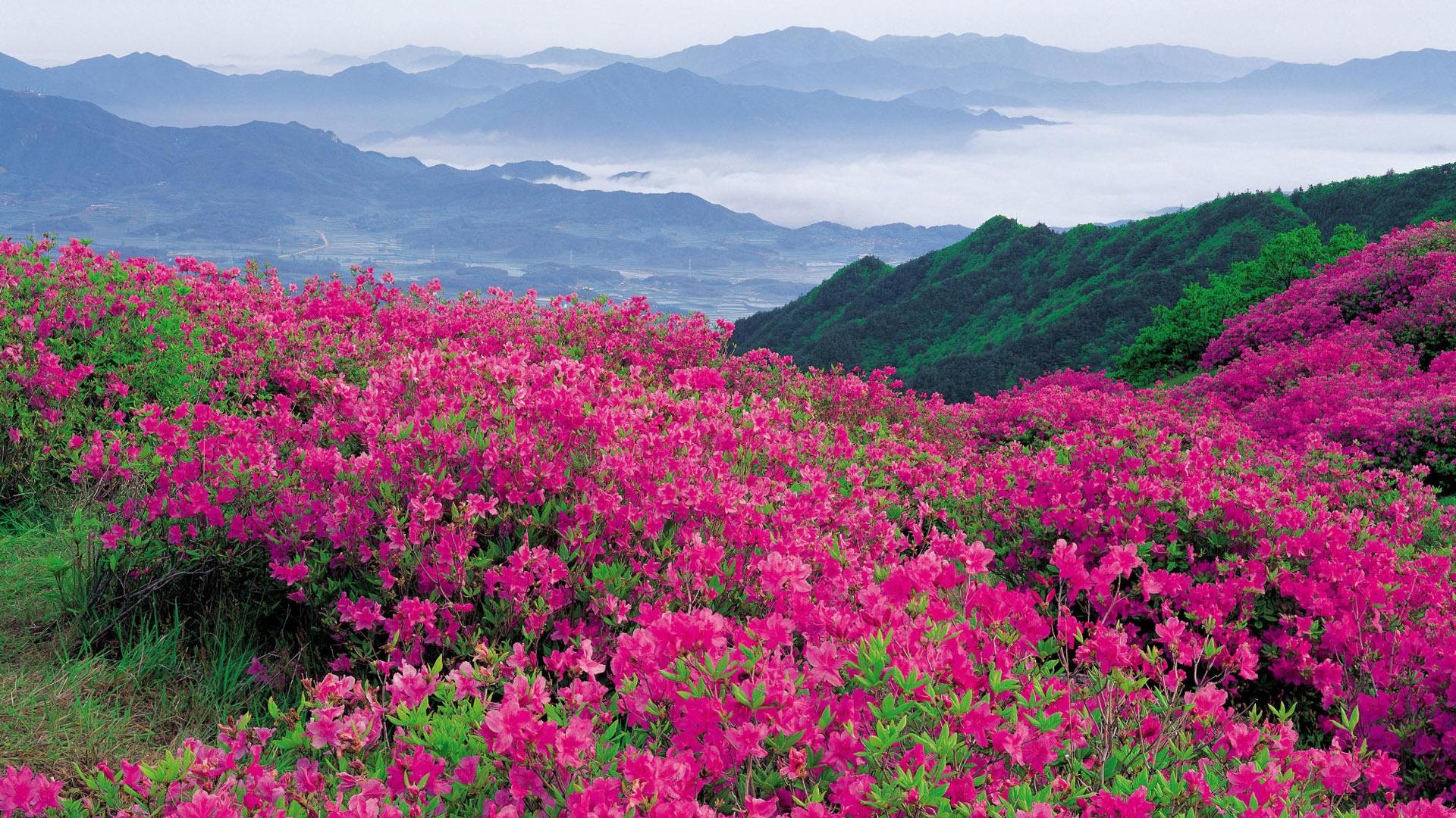 Обои для рабочего стола долина цветов