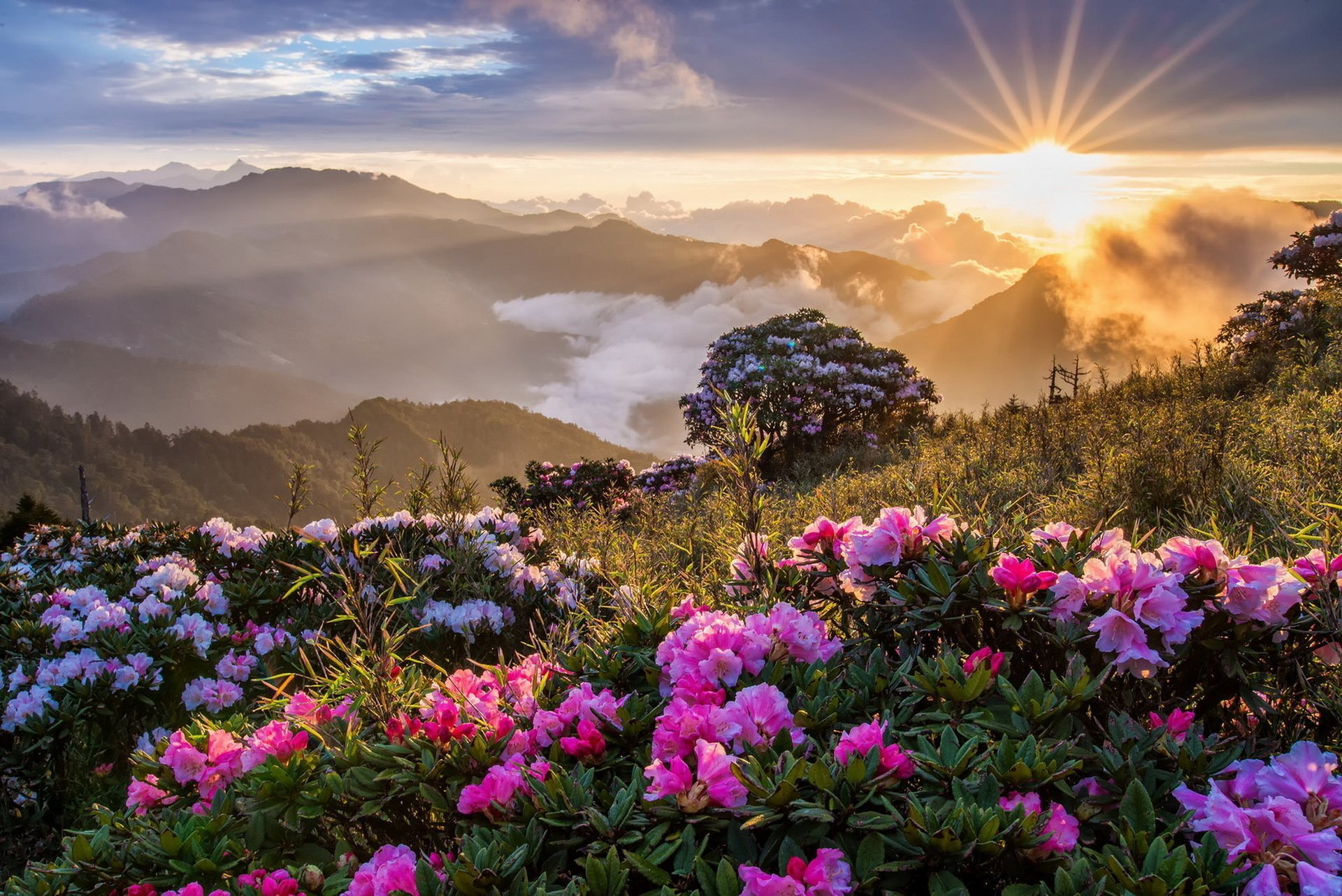 sunrise pictures in the mountains - HD1440×900