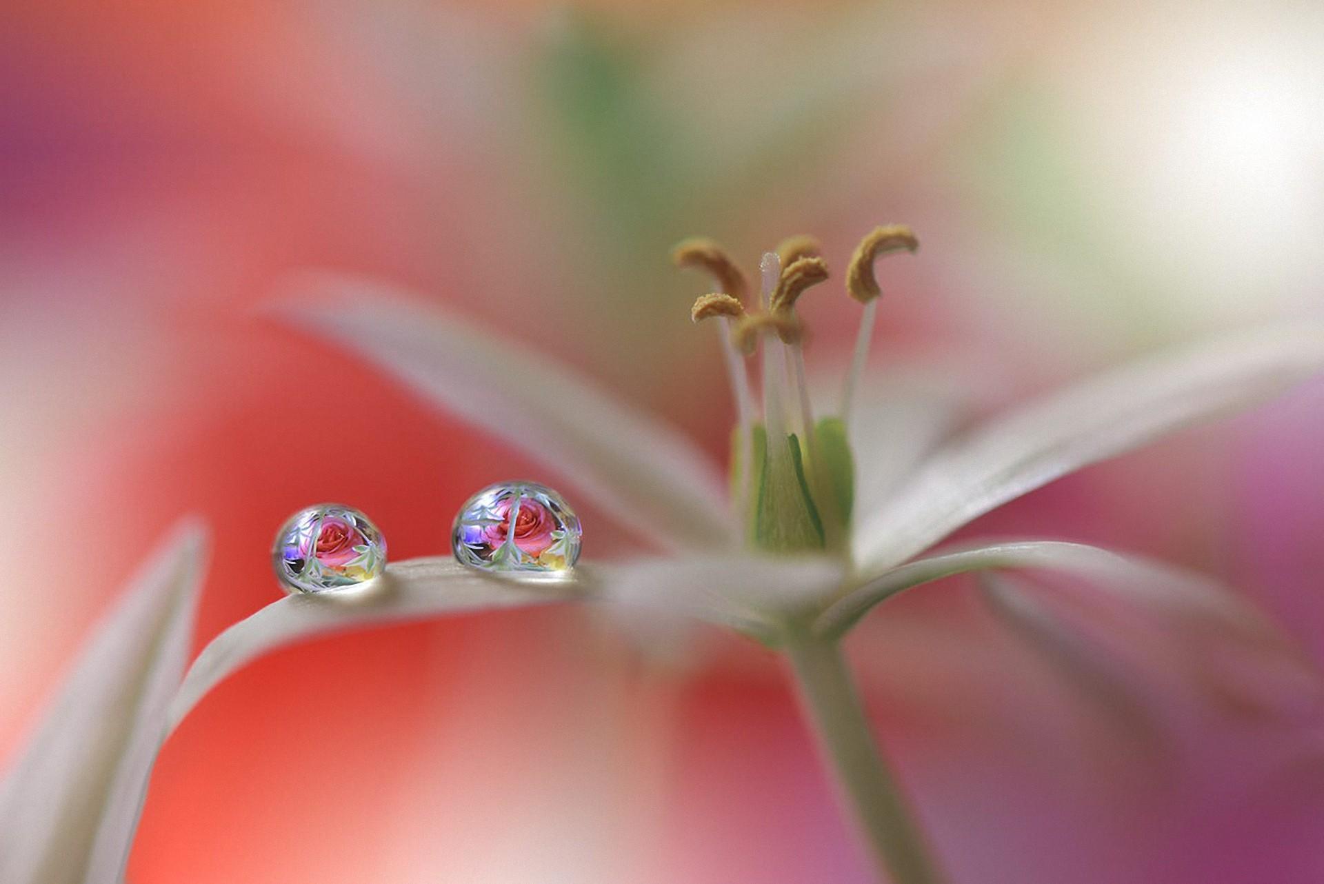 Цветок в каплях фото