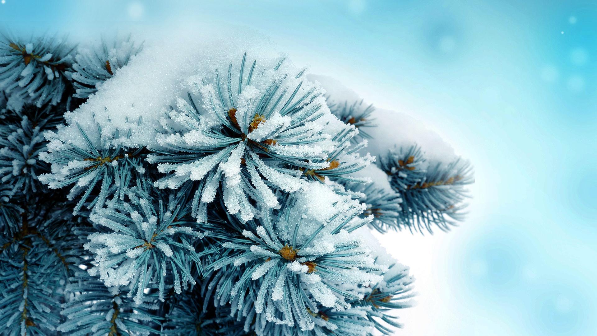 обои на рабочий стол зима скачать бесплатно широкоформатные зима № 218024 без смс