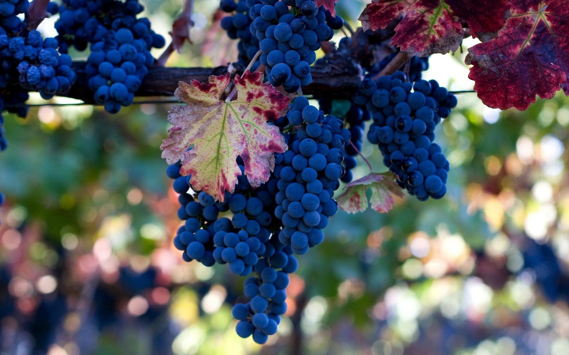 Картинки виноградом