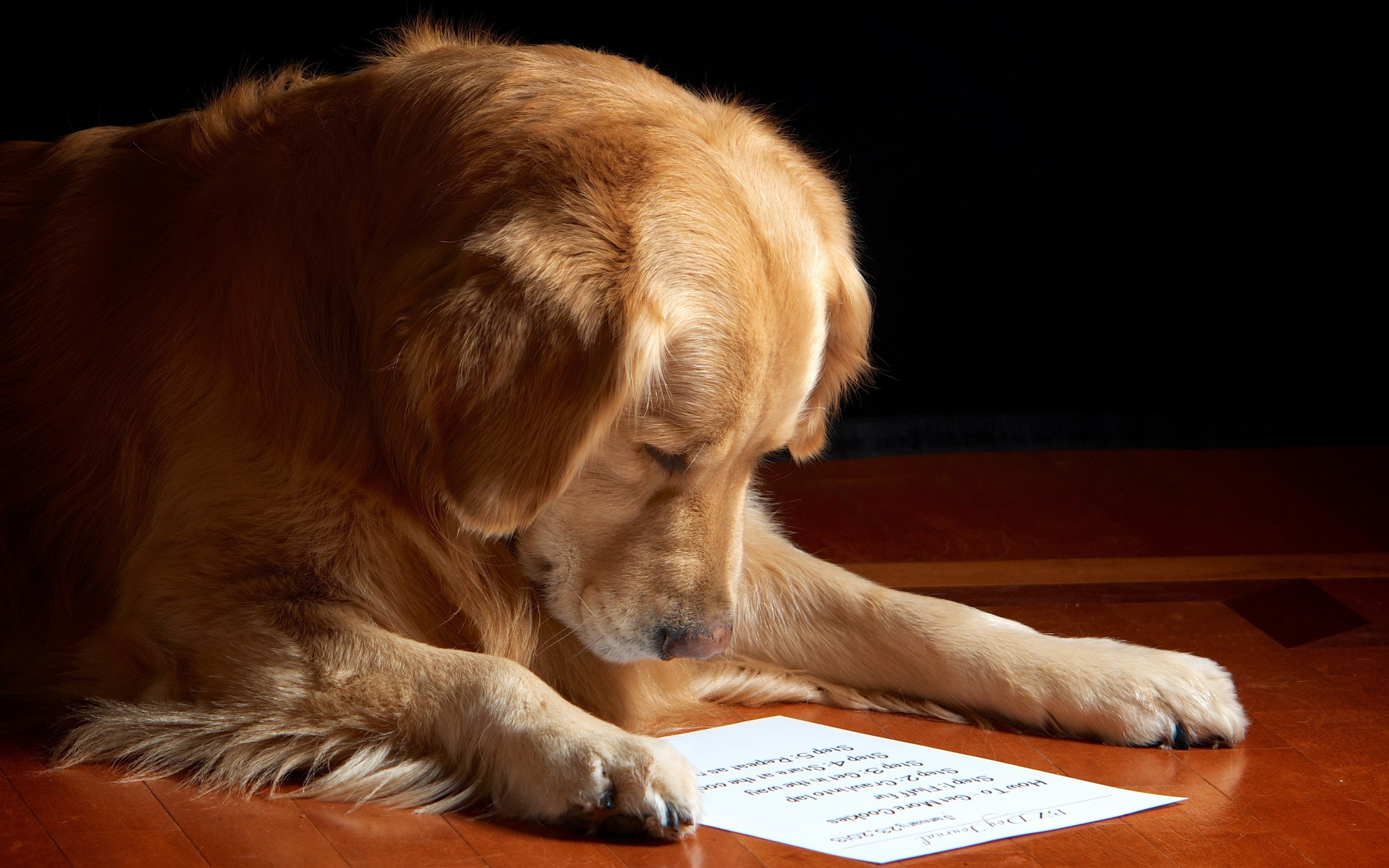 golden retriever research paper The paper uses the golden retriever as an example, using genetic information to show the breed split from the flat-coated retriever in 1895  the genetic research in the paper is the first.
