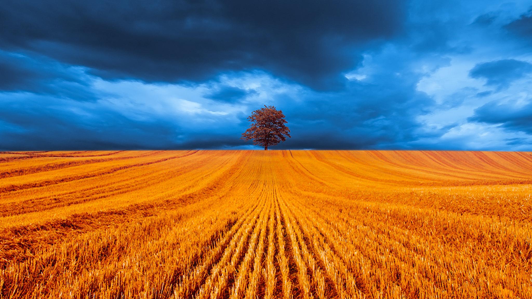 фото пшеничного поля и синего неба много лет испытала