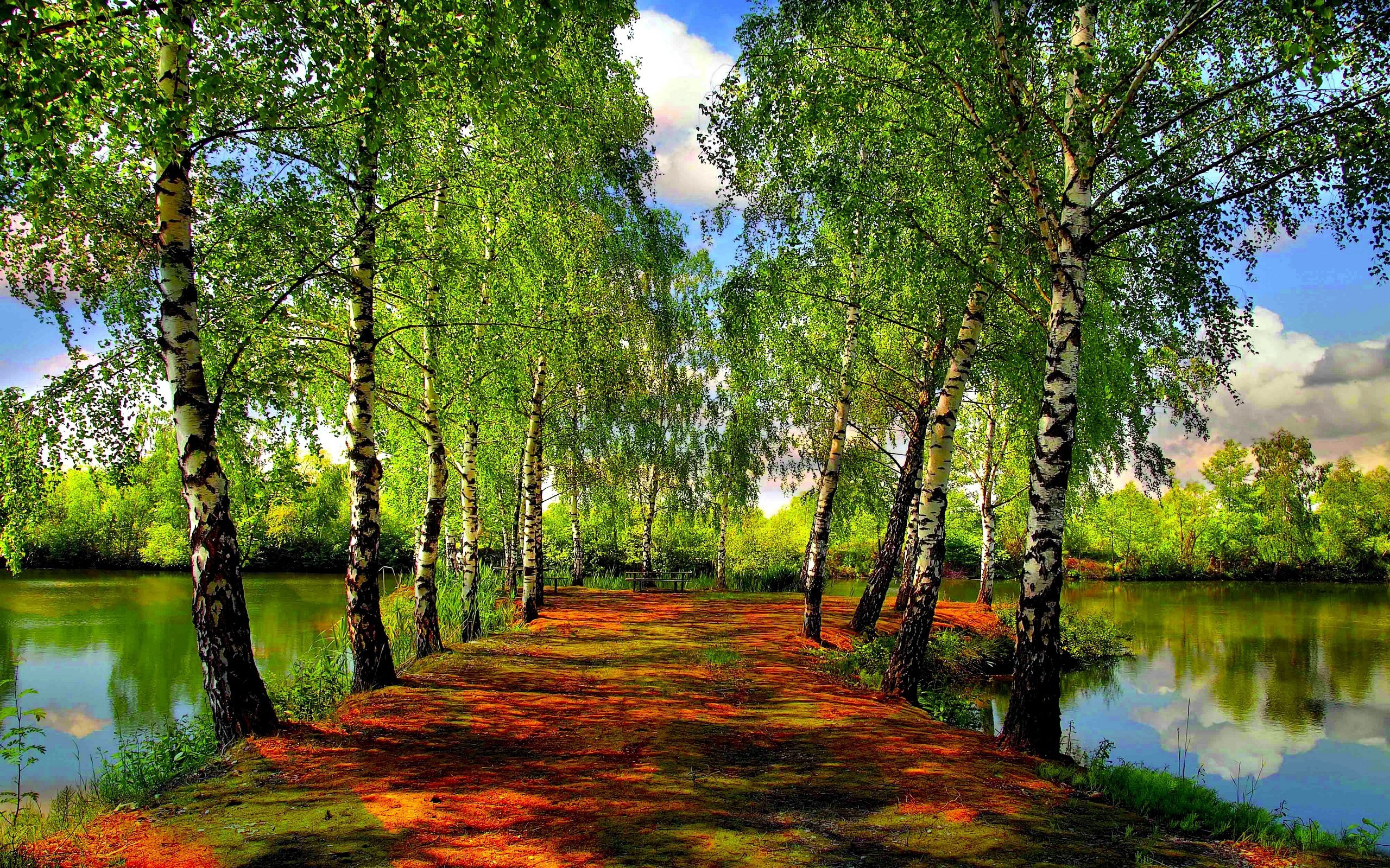 березы дорога зелень лето без смс