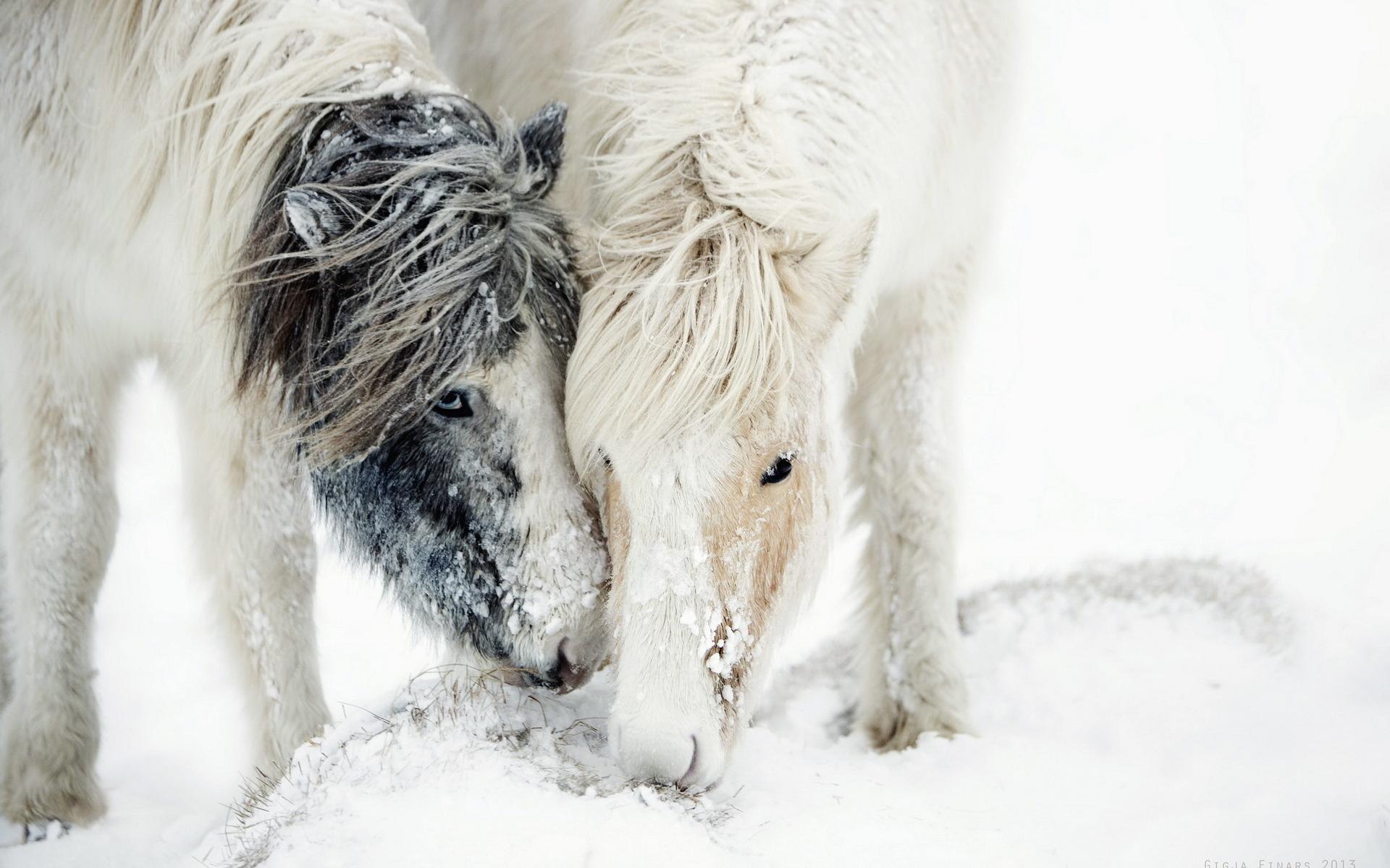 зимняя лошадь обои на рабочий стол № 511111 загрузить