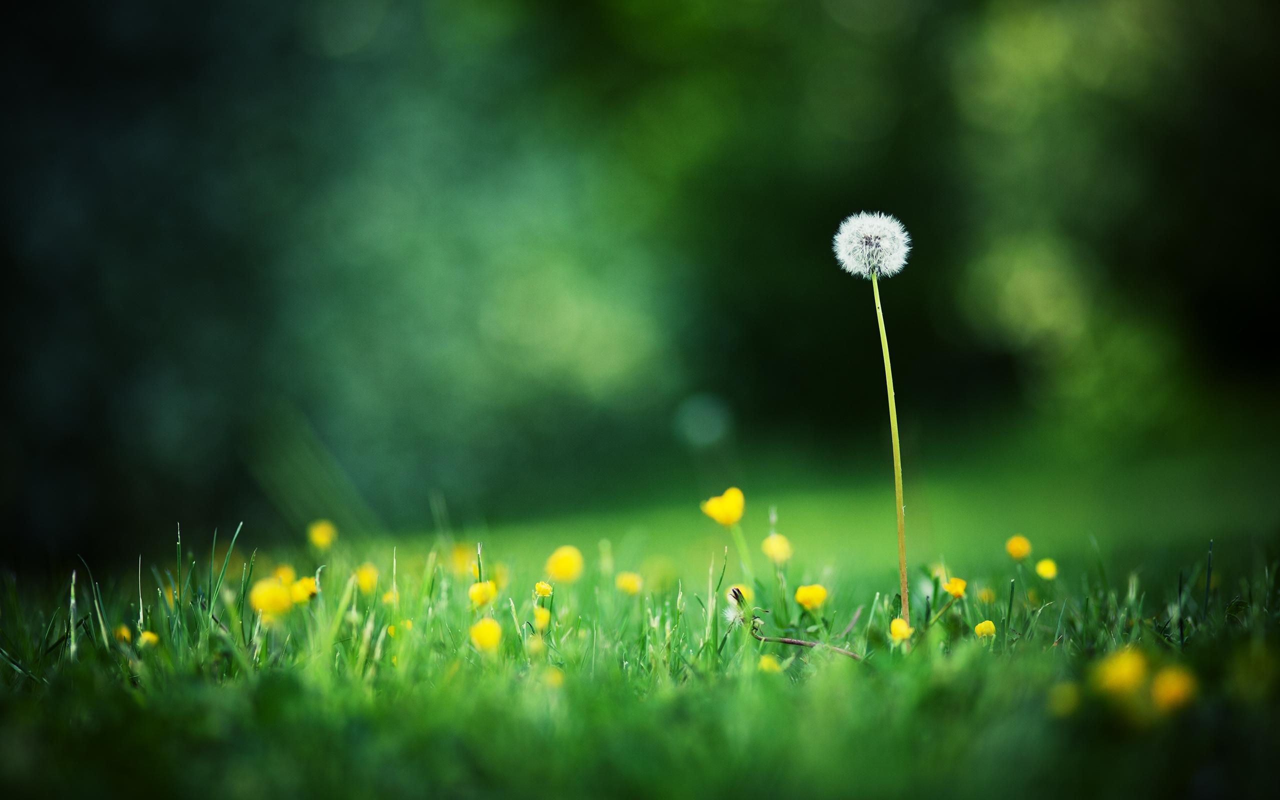 Трава макро съемка  № 3148001 бесплатно