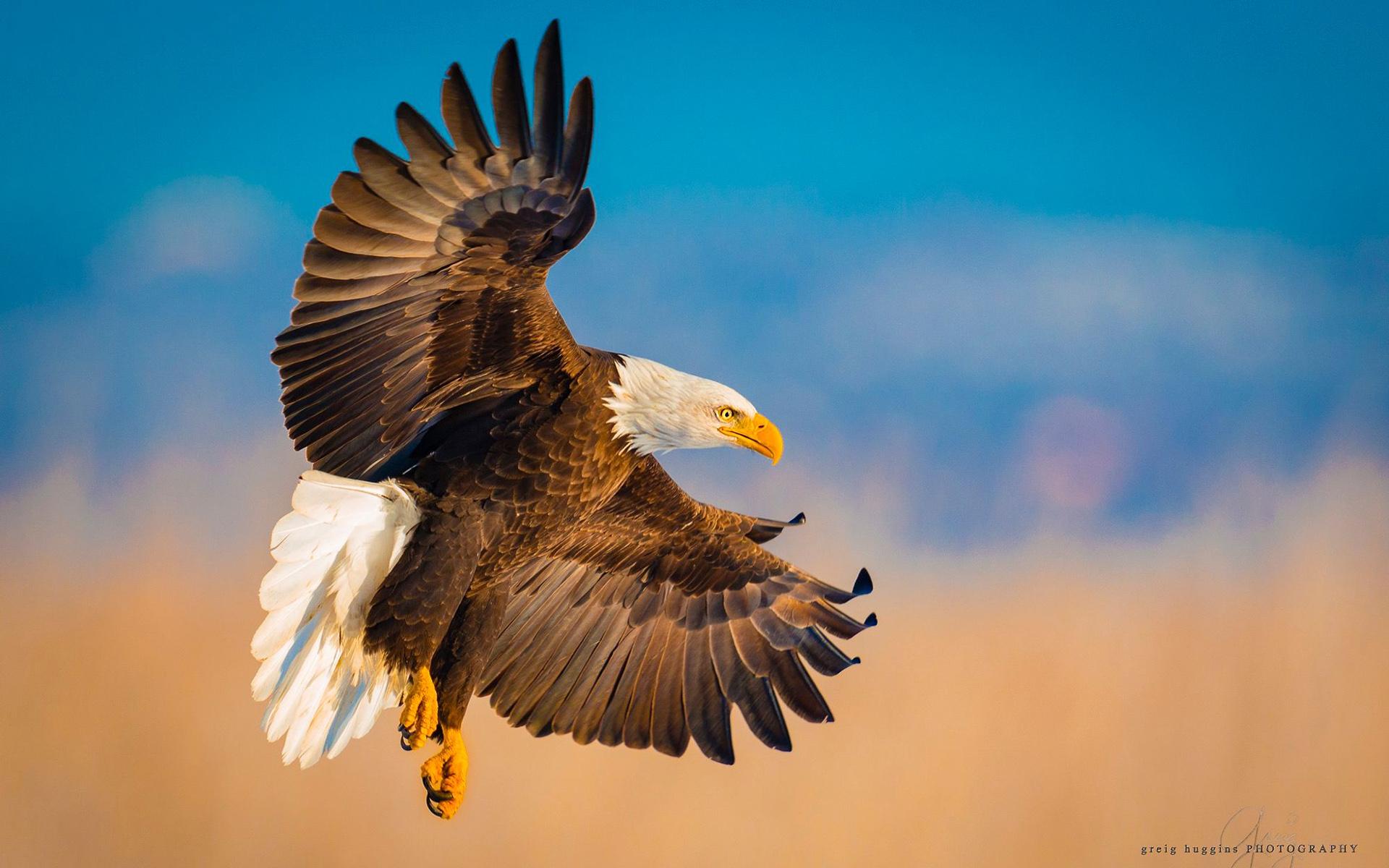Открытка полет орла, утро