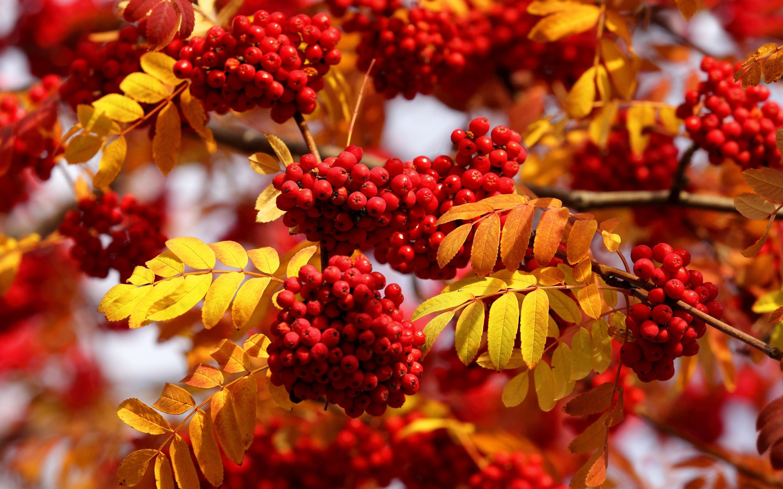 порою картинка осенние листья гроздья рябины при желании полететь