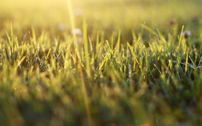 природа макро трава  № 2758744  скачать