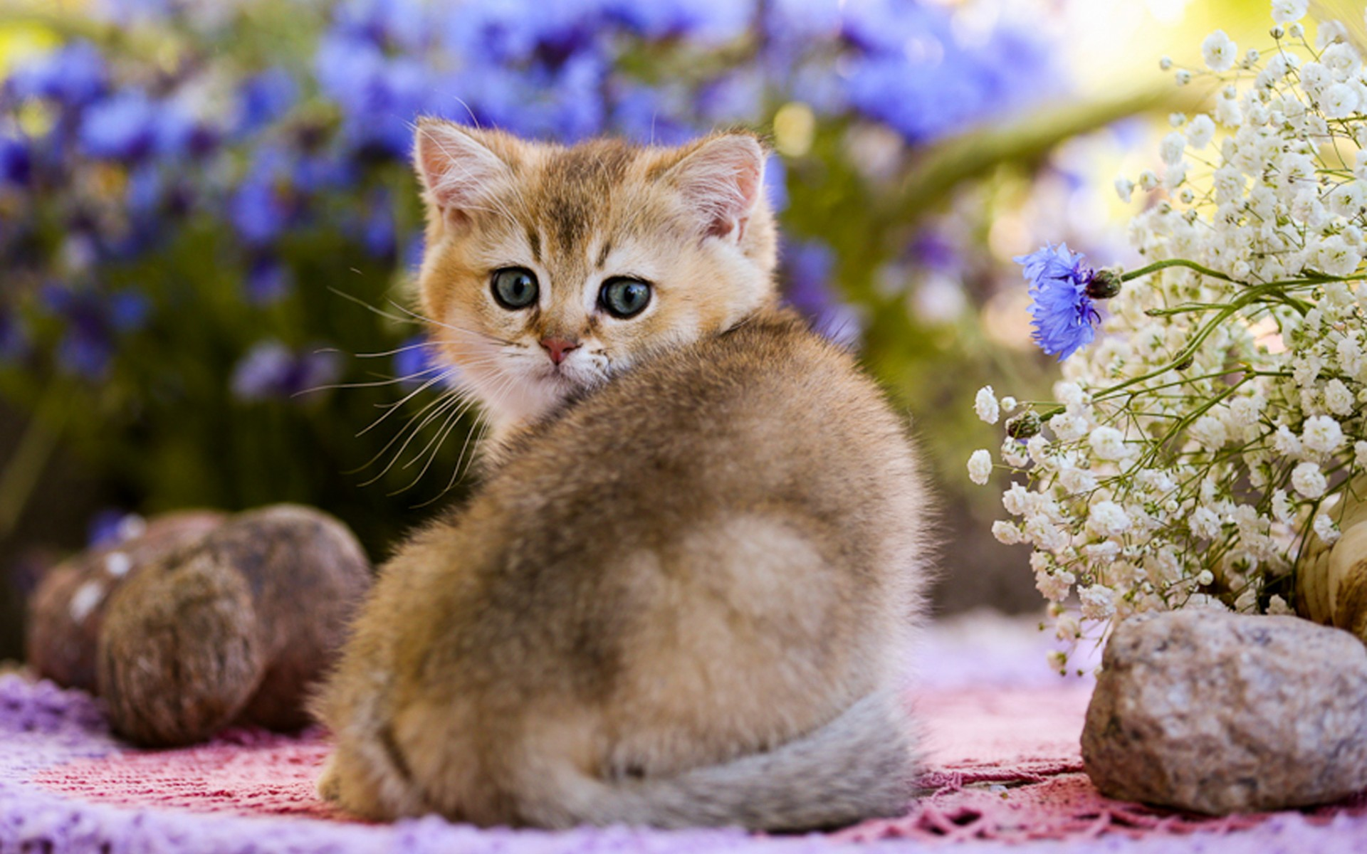 Весенние котики без смс