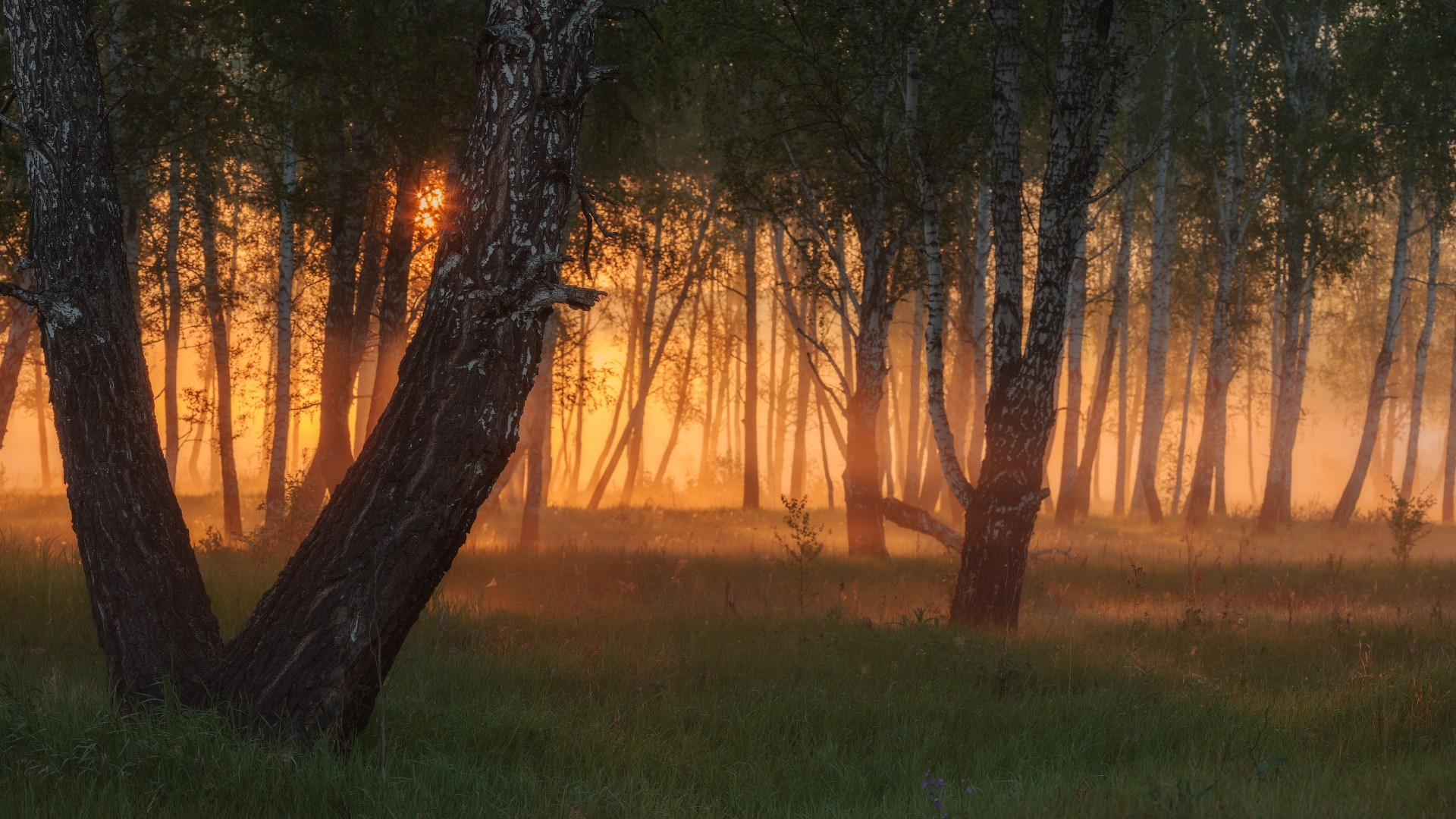 картинка красивого заката в лесу