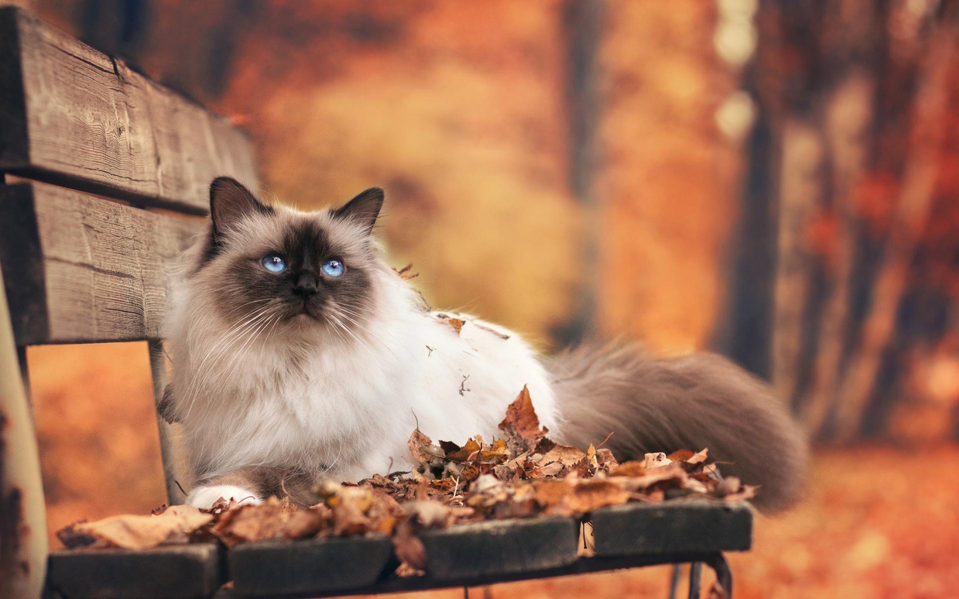 Картинки осень и кошки