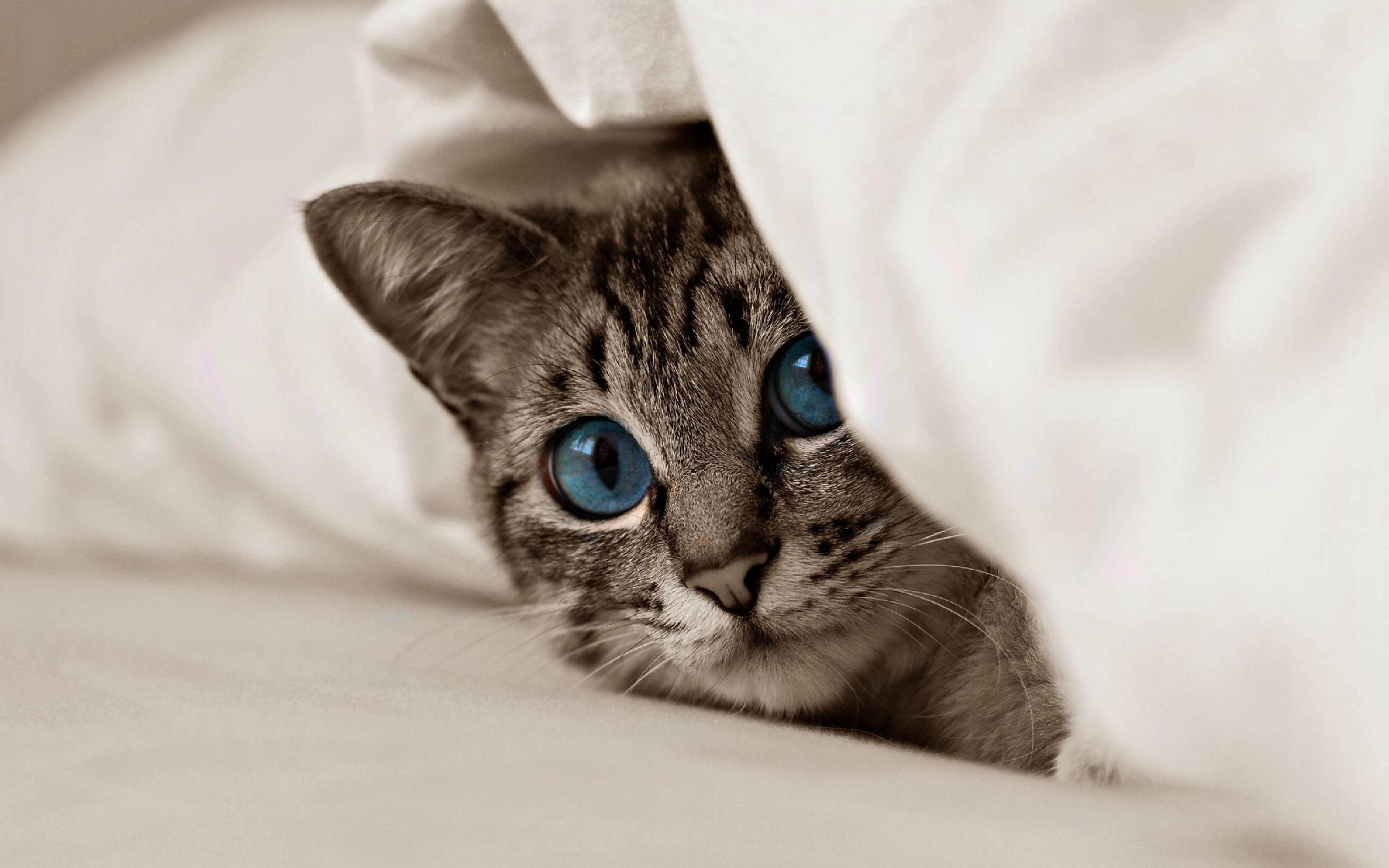 кошка зеленые глаза постель  № 3655549 загрузить