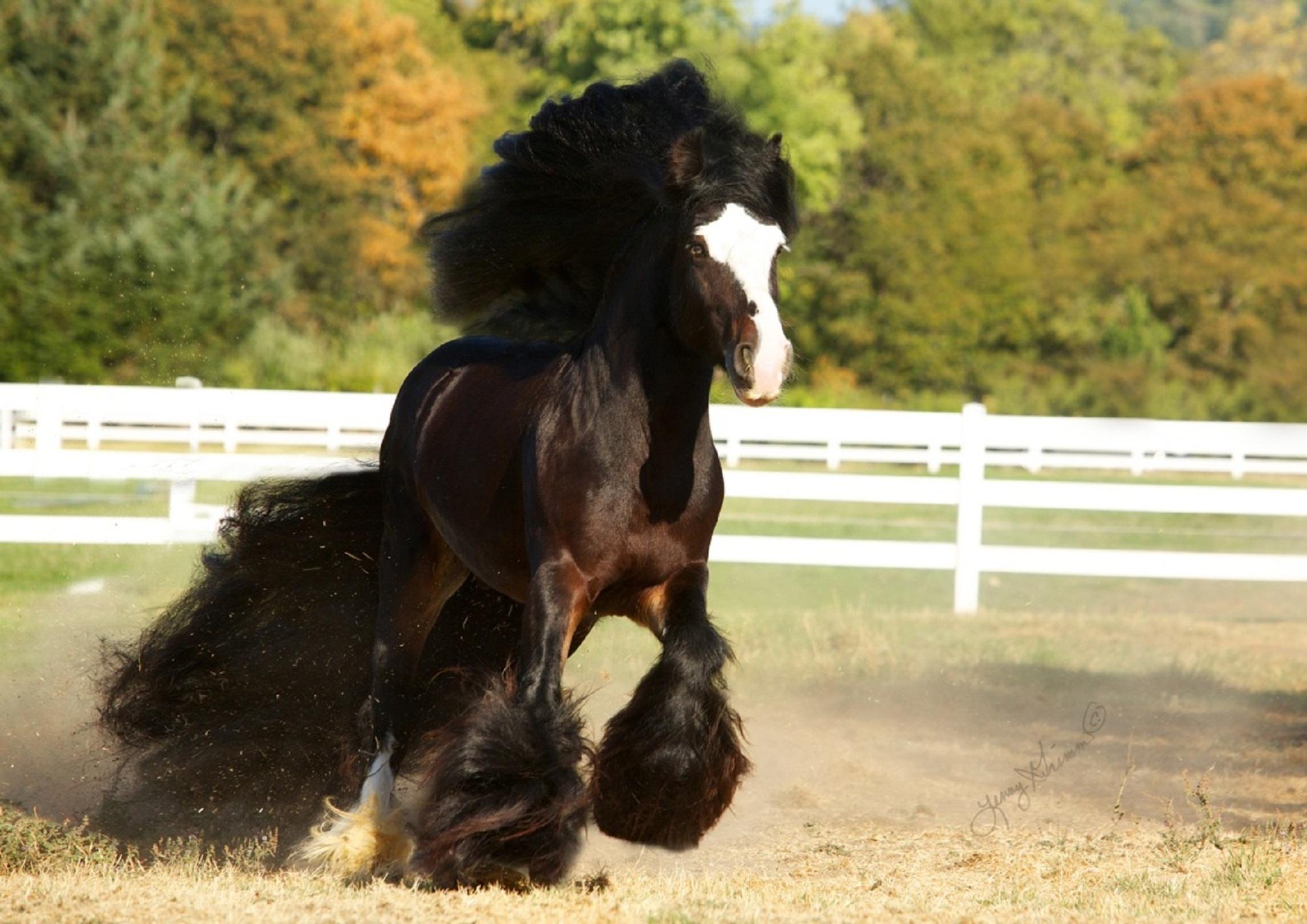 фото гп тел циганские лошади