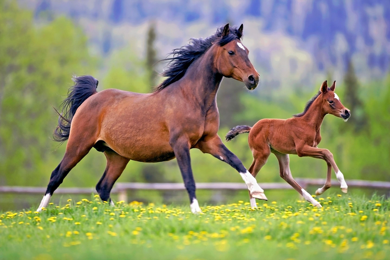 этом картинки лошадь и жеребята ещё