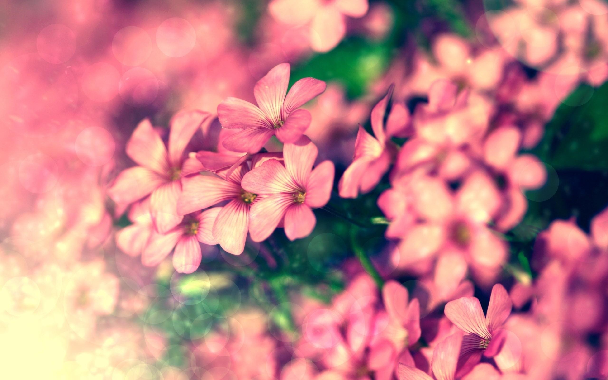 цветок, макро, розовый, природа, растения  № 695885 бесплатно
