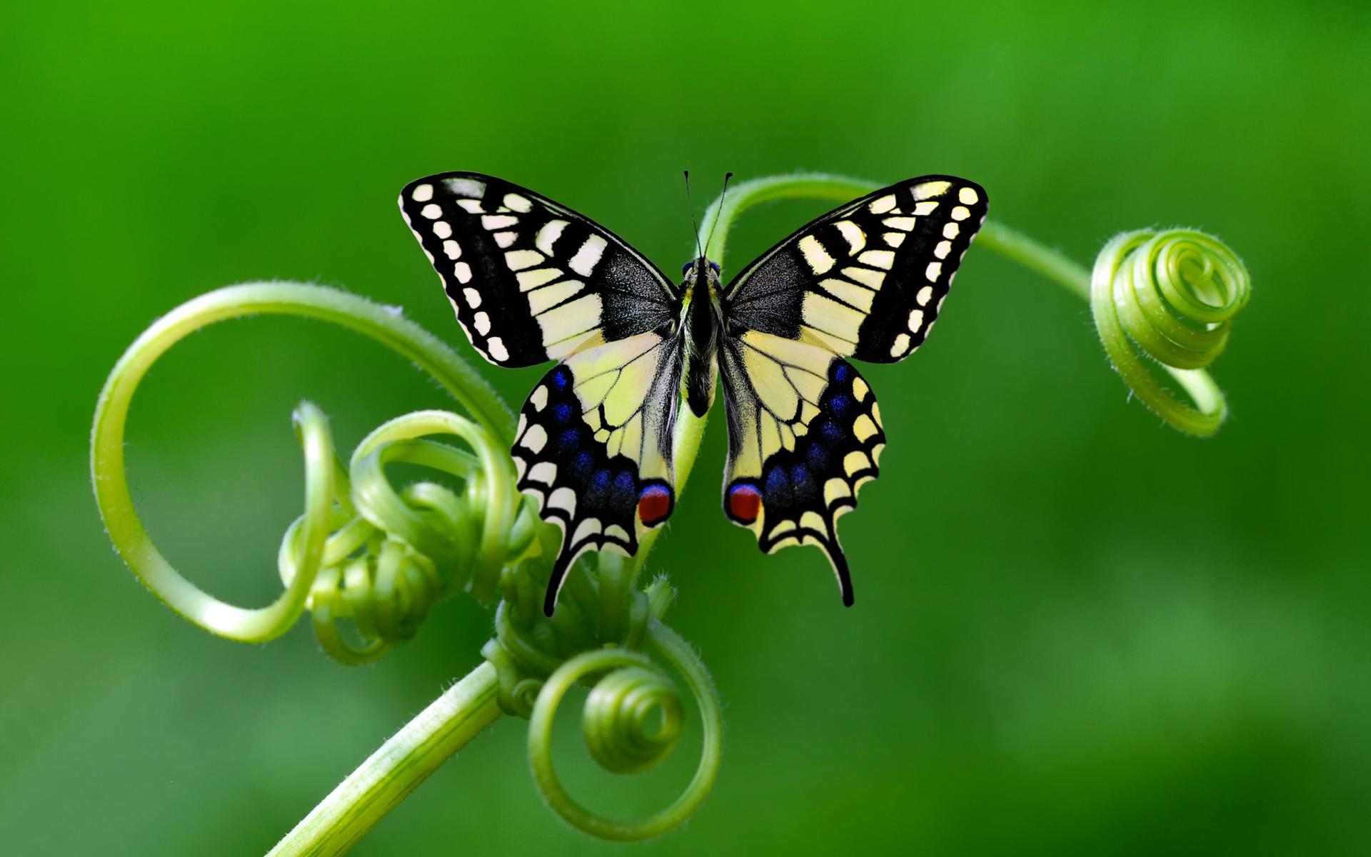 Картинки макро бабочки