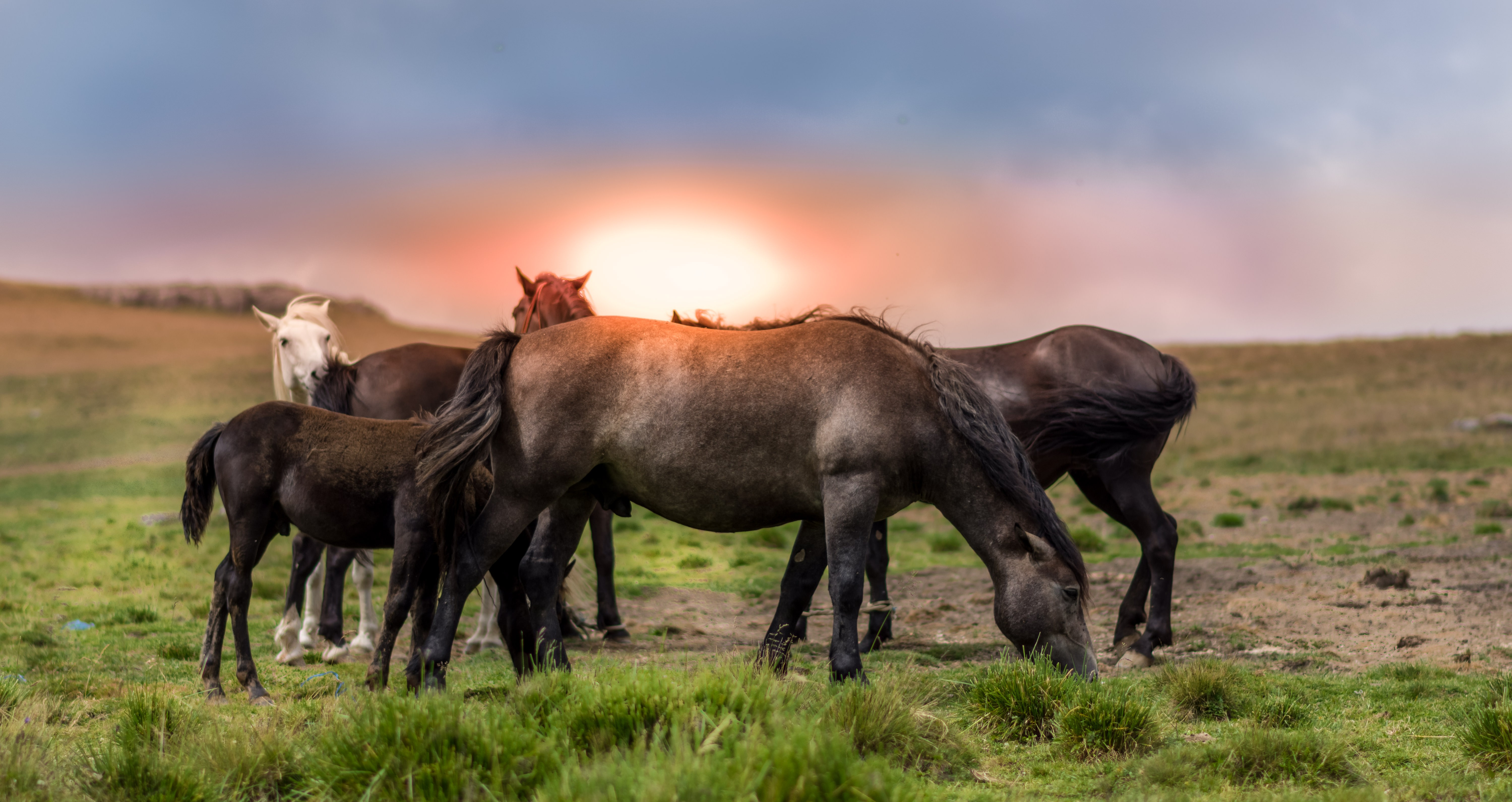 Пастбище лошадей скачать