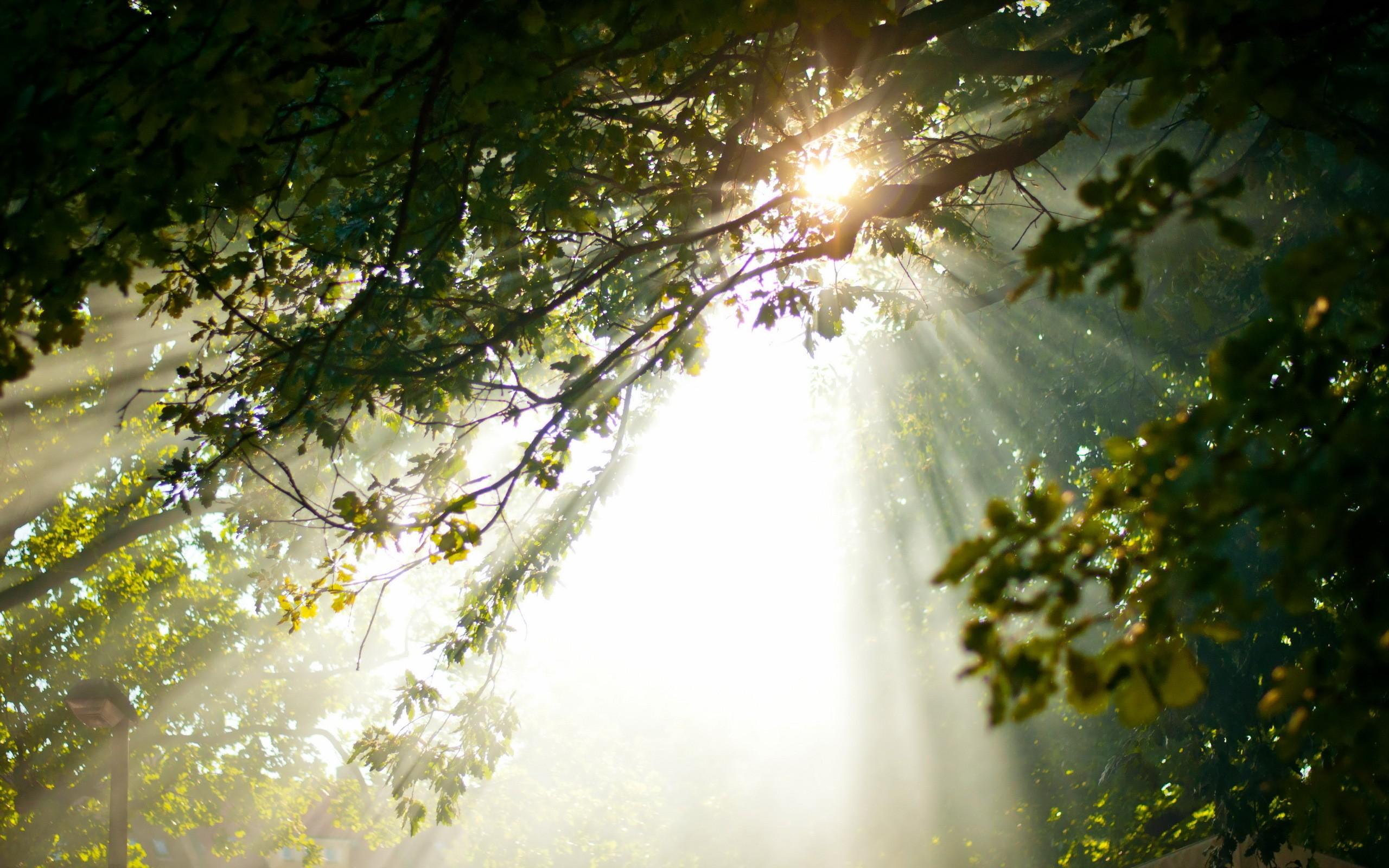 Лучи света сквозь листья  № 3096076  скачать