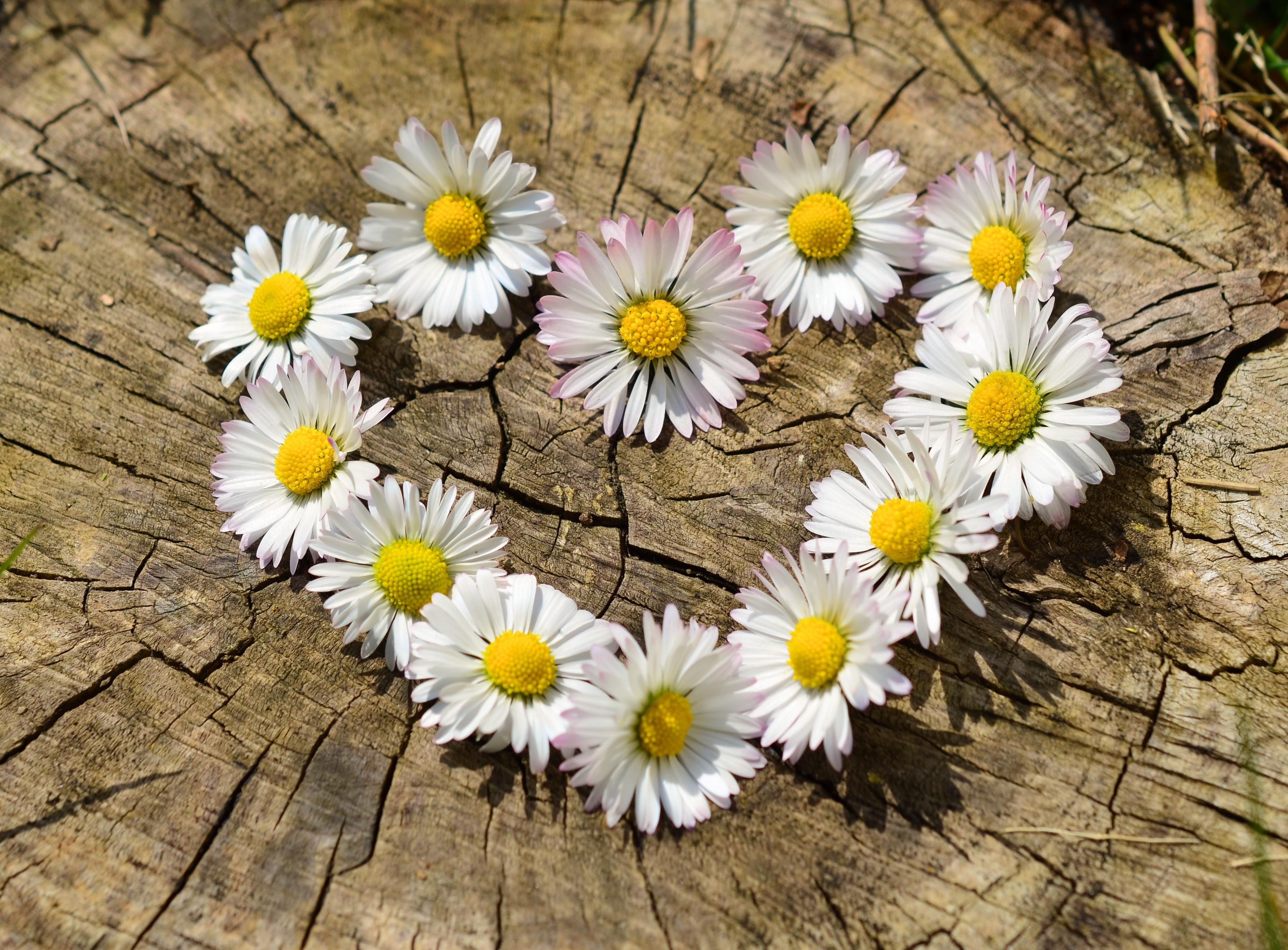 Днем, цветы с любовью картинки