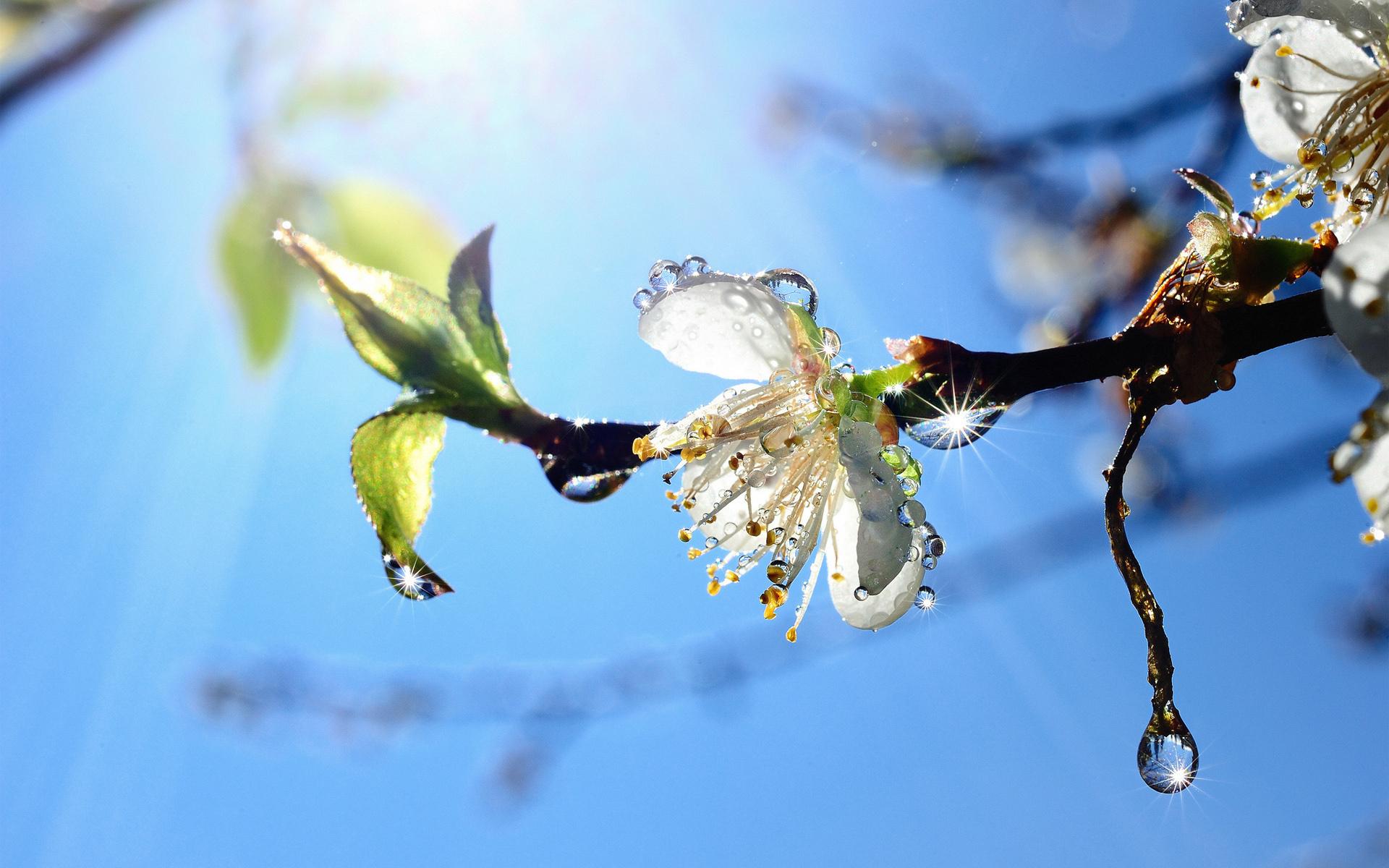 Видео поздравление весна